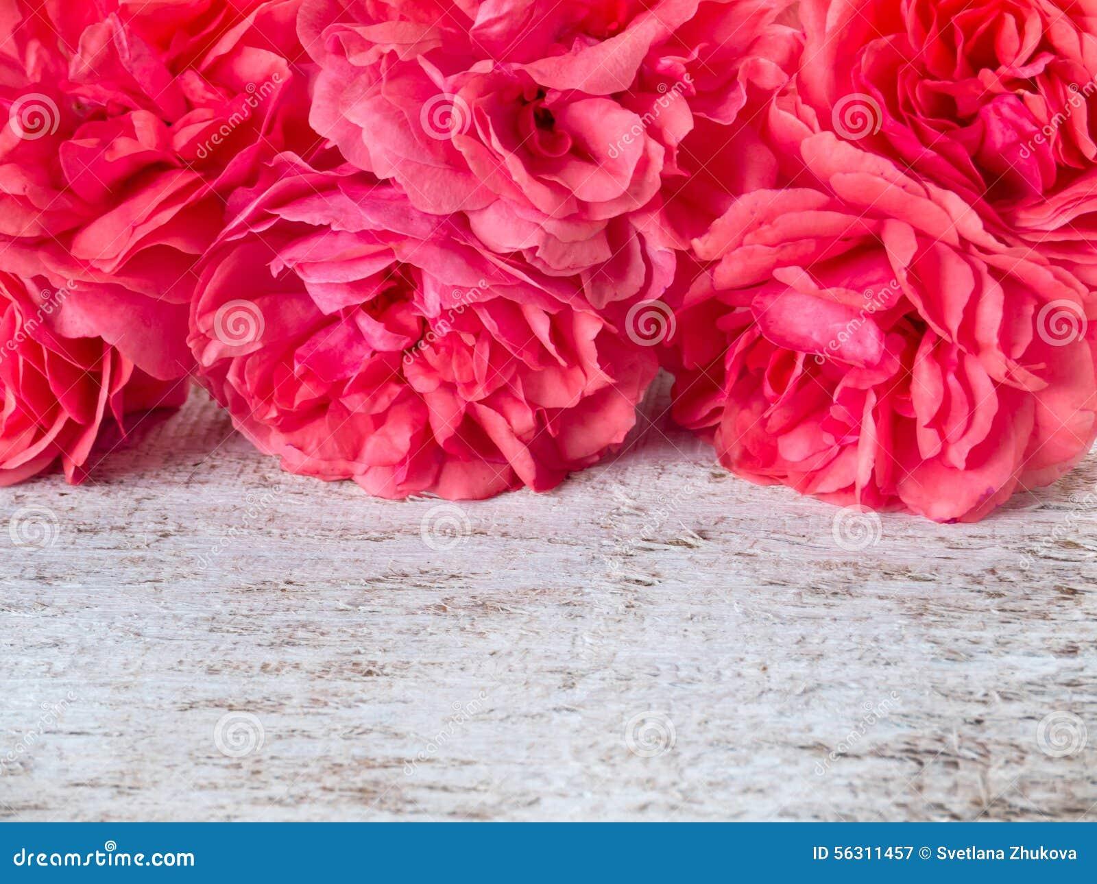 Rosas en el fondo rústico blanco