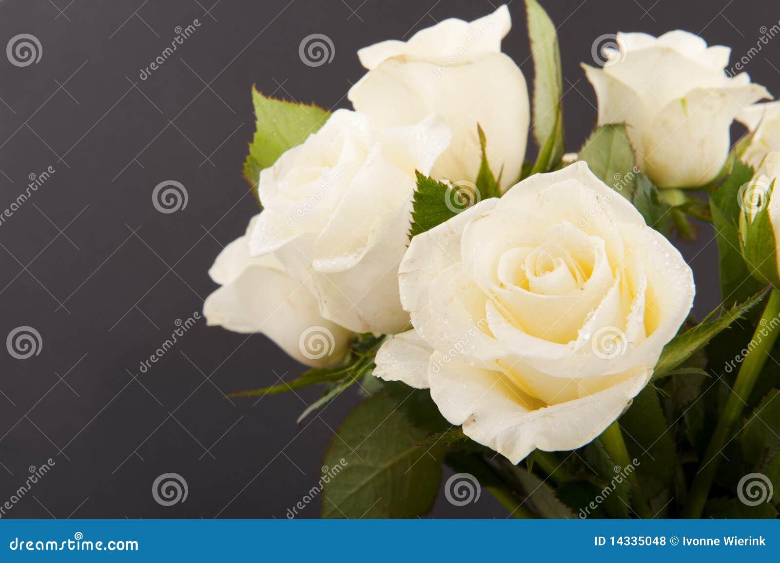 Rosas en negro
