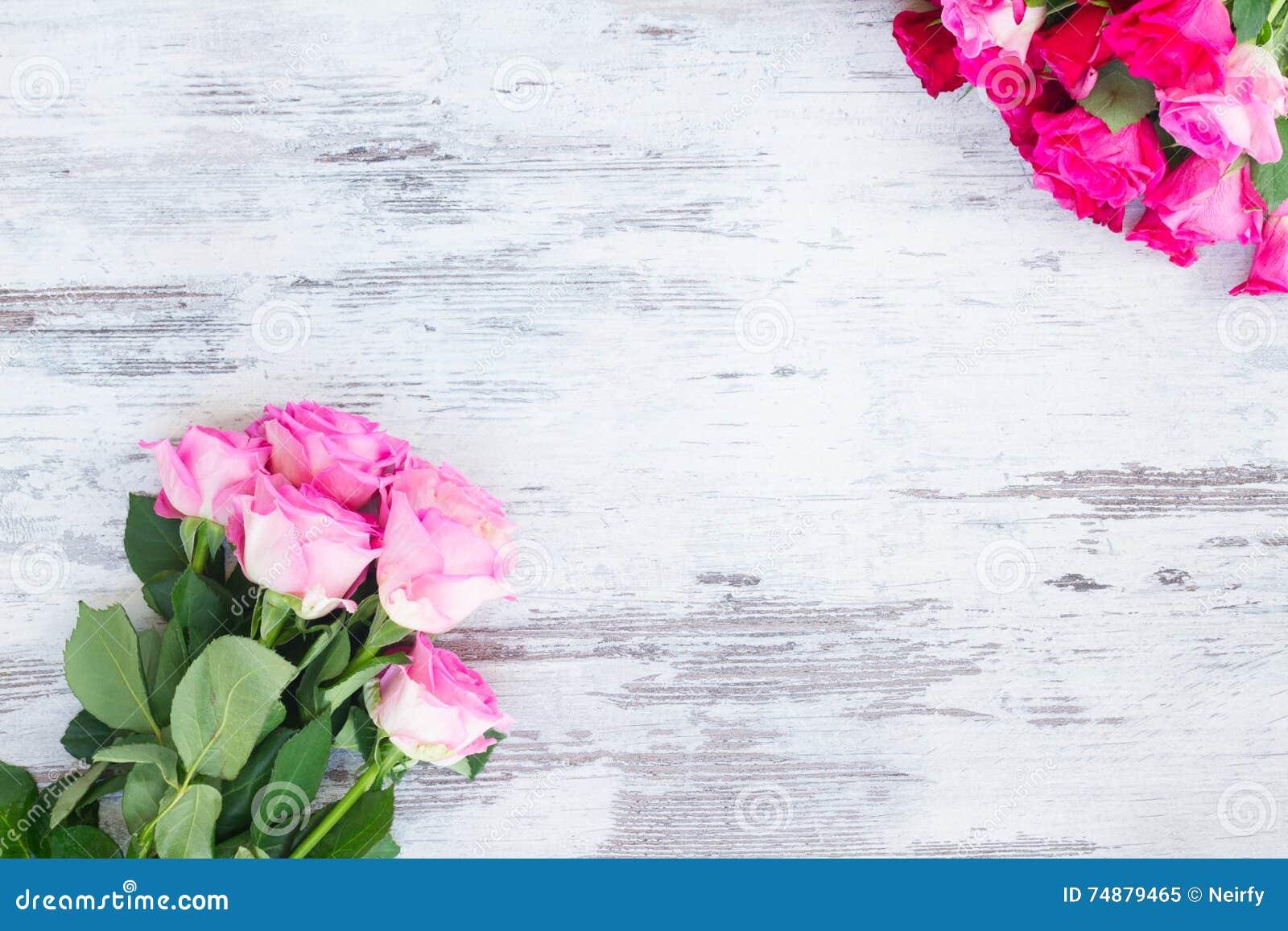 Rosas frescas cor-de-rosa