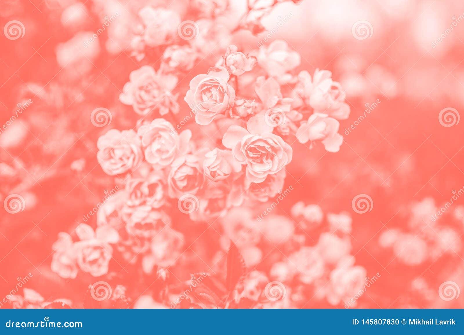 Rosas Fundo coral de vida