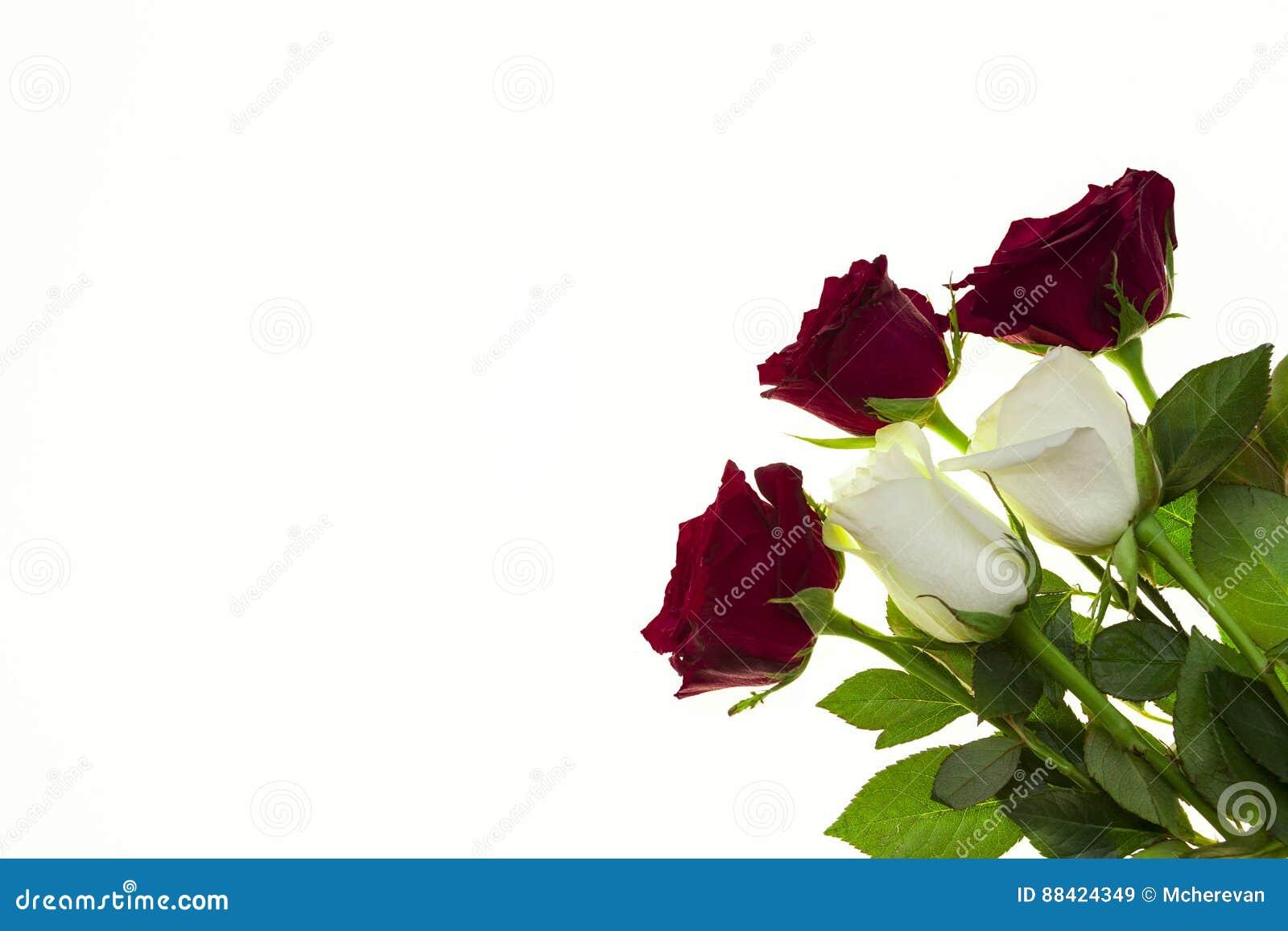 Rosas Hermosas En El Ramo, Fondo Para Las Invitaciones De
