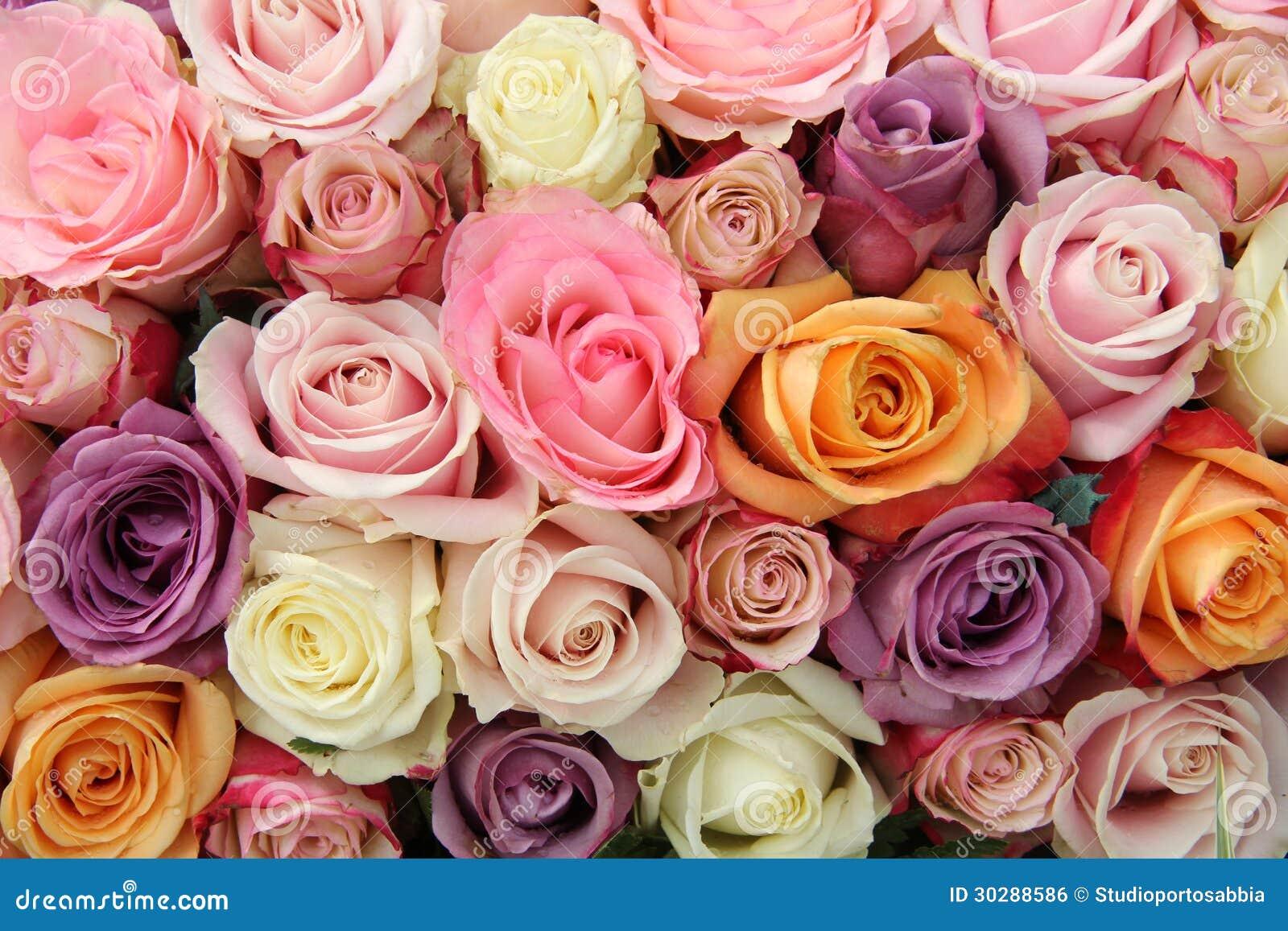 Rosas en colores pastel mezcladas foto de archivo imagen - Fotos de rosas de colores ...