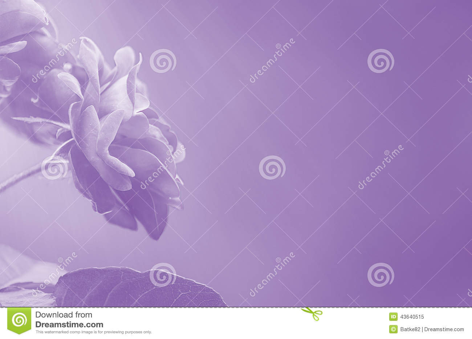 Rosas púrpuras en extracto borroso del fondo