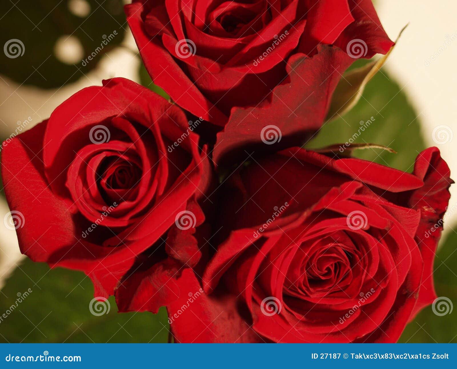 Download Rosas rojas imagen de archivo. Imagen de colores, rose, jardín - 27187