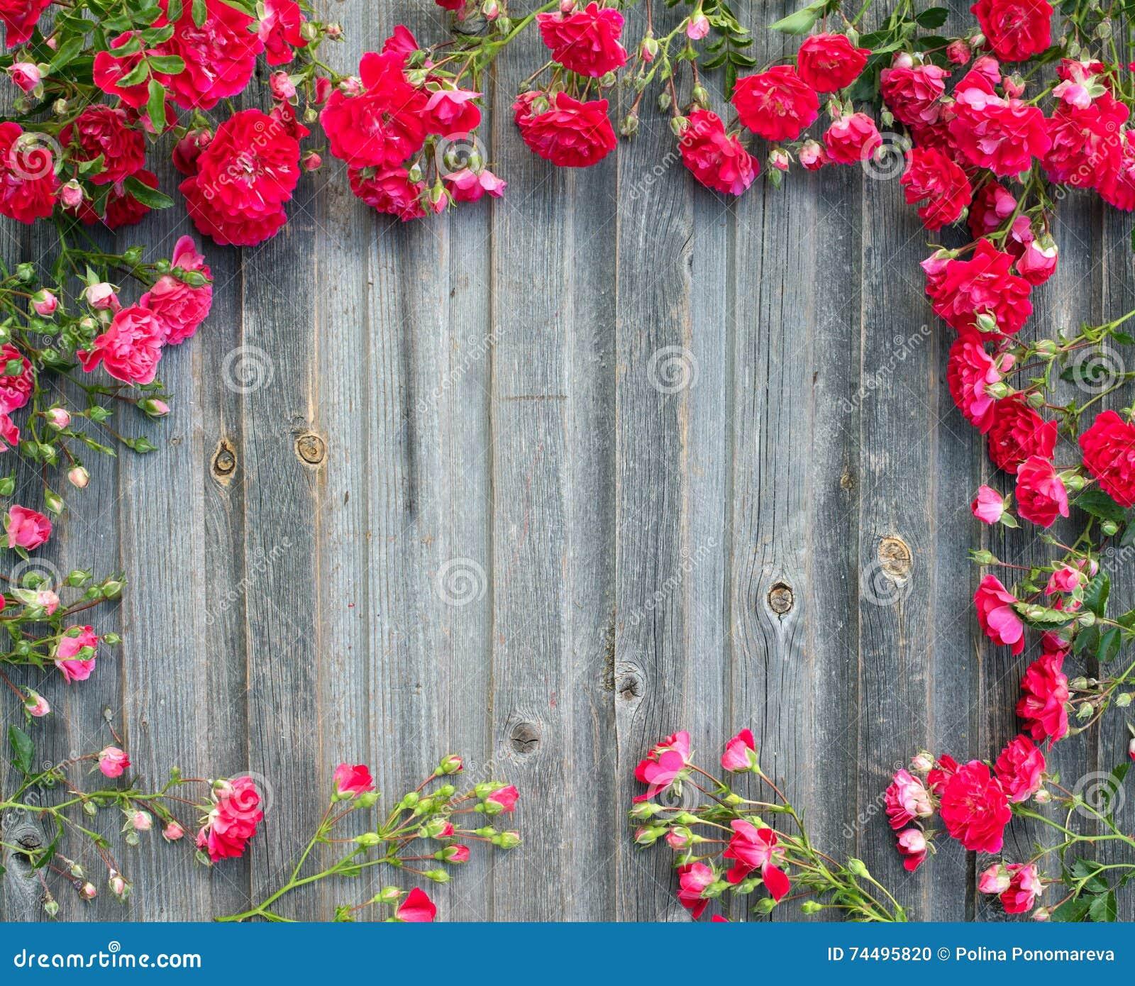 Rosas rojas del jardín hermoso en textur diseñado retro de madera resistido