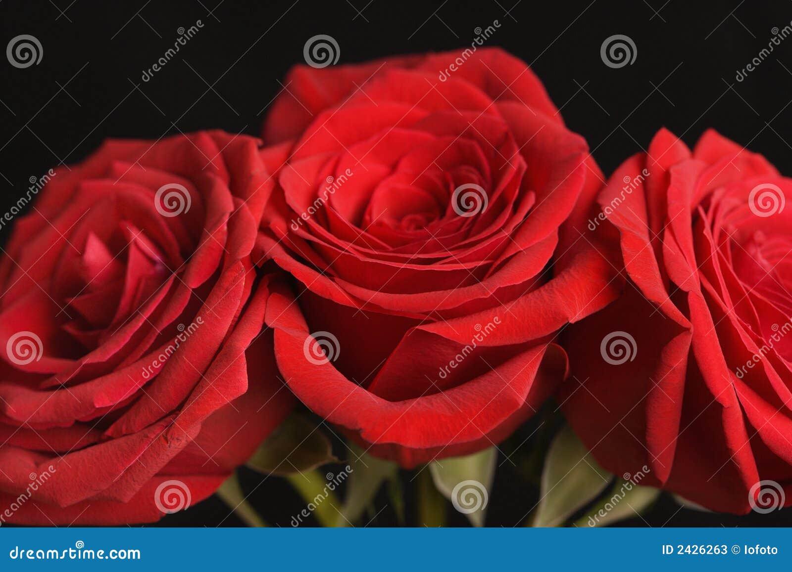 Rosas rojas en negro.