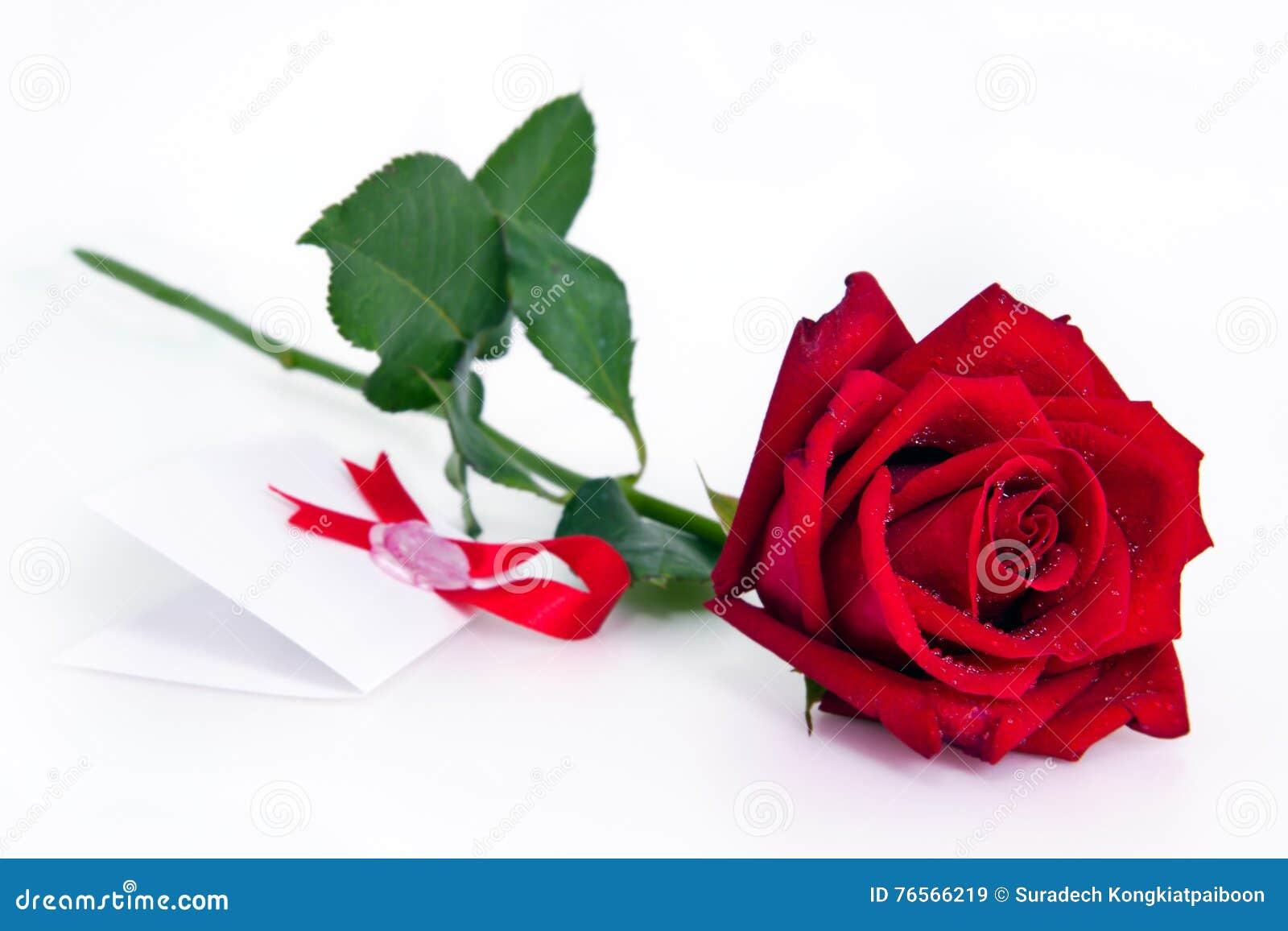 Rosas Rojas Hermosas En Un Fondo Blanco Imagen De Archivo