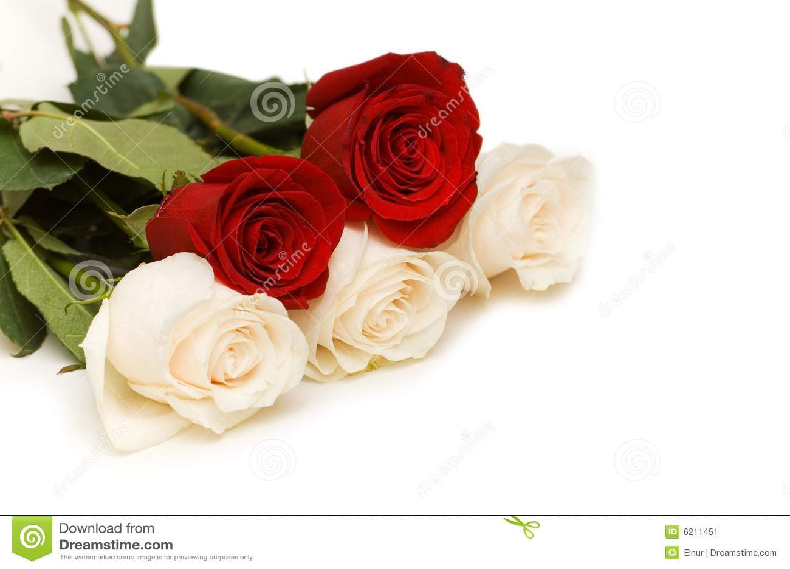 Rosas Rojas Y Blancas Aisladas Imagen De Archivo Imagen De Aislado
