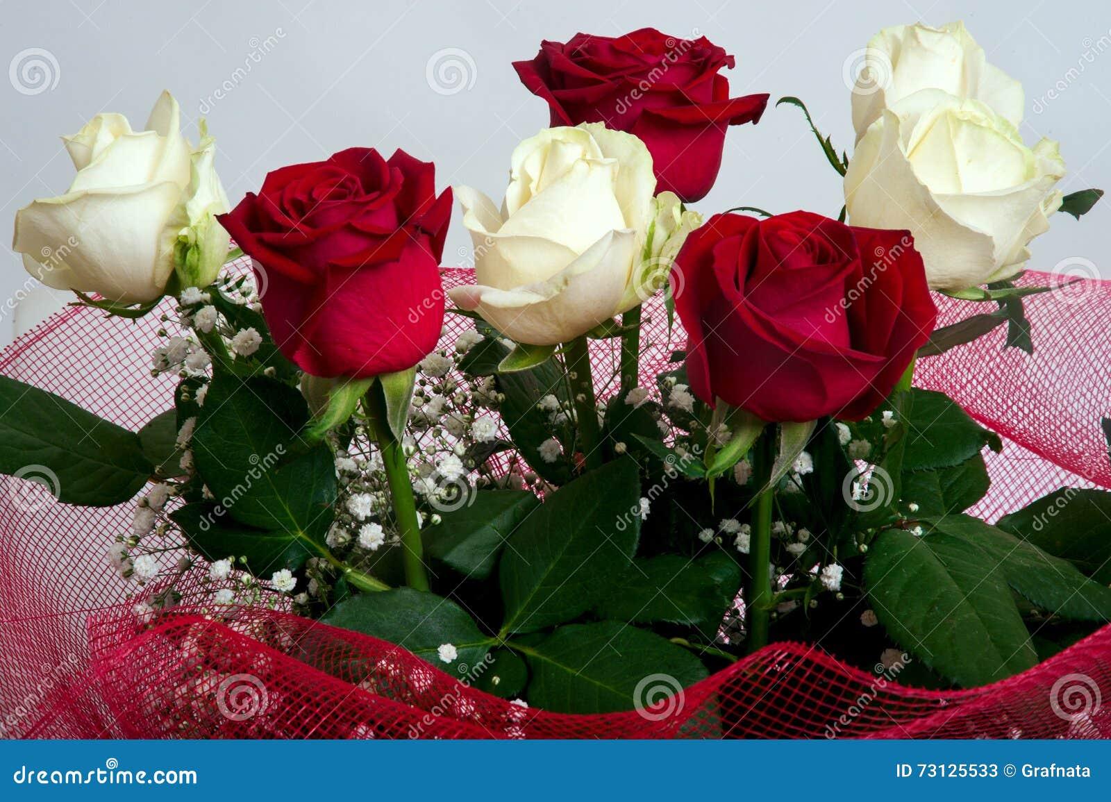Rosas Rojas Y Blancas Frescas Imagen De Archivo Imagen De Belleza