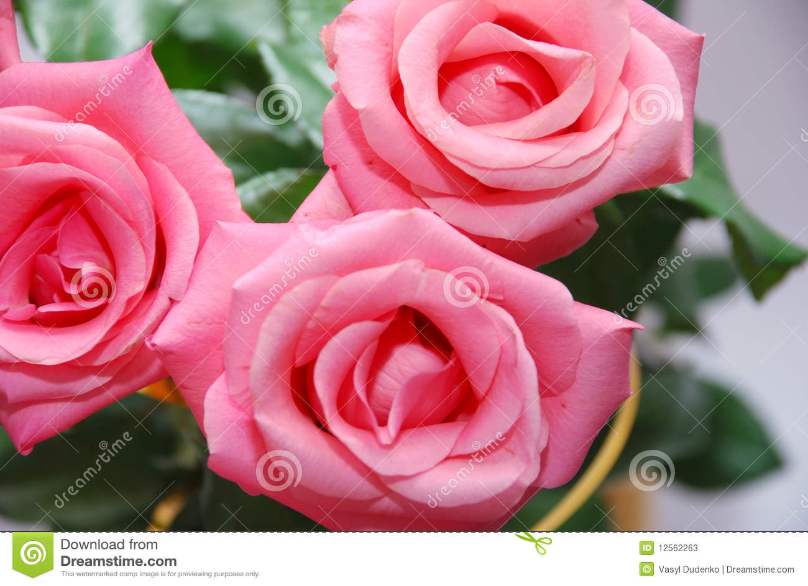 Rosas rosadas hermosas fotos de archivo imagen 12562263 - Rosas rosas hermosas ...