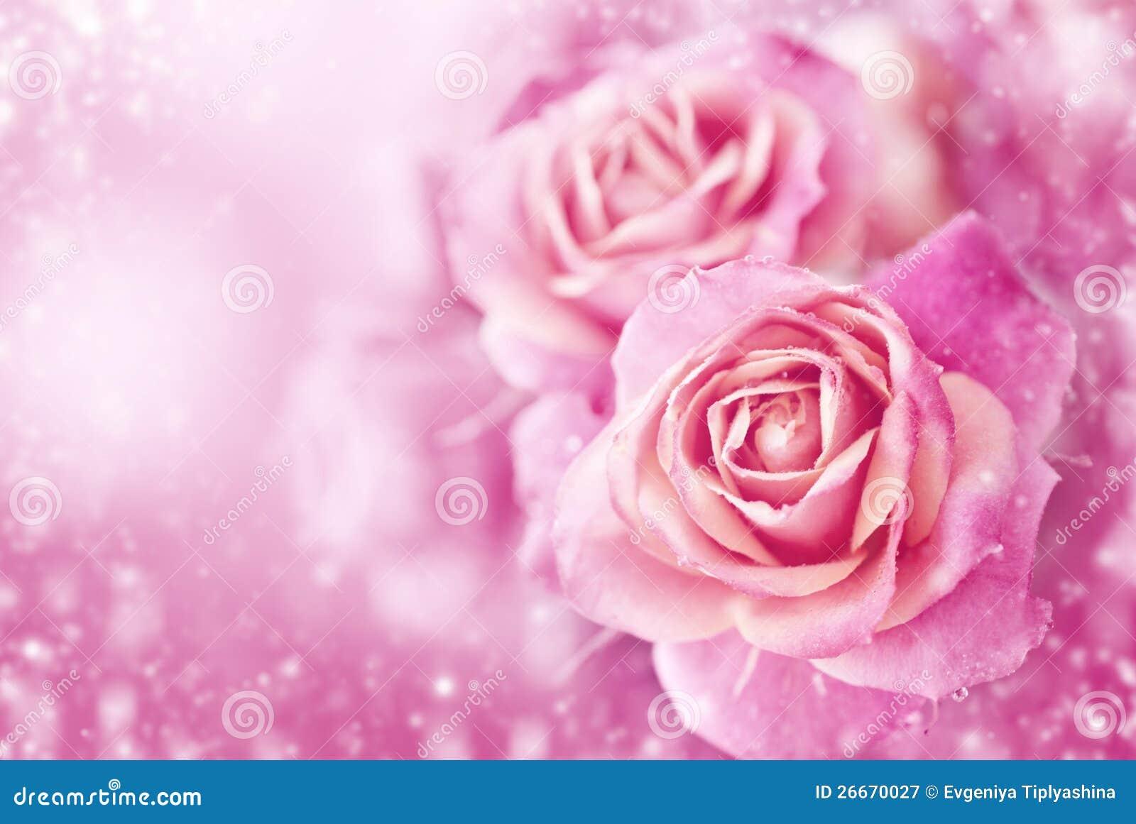 Rosas rosadas hermosas fotograf a de archivo libre de - Rosas rosas hermosas ...