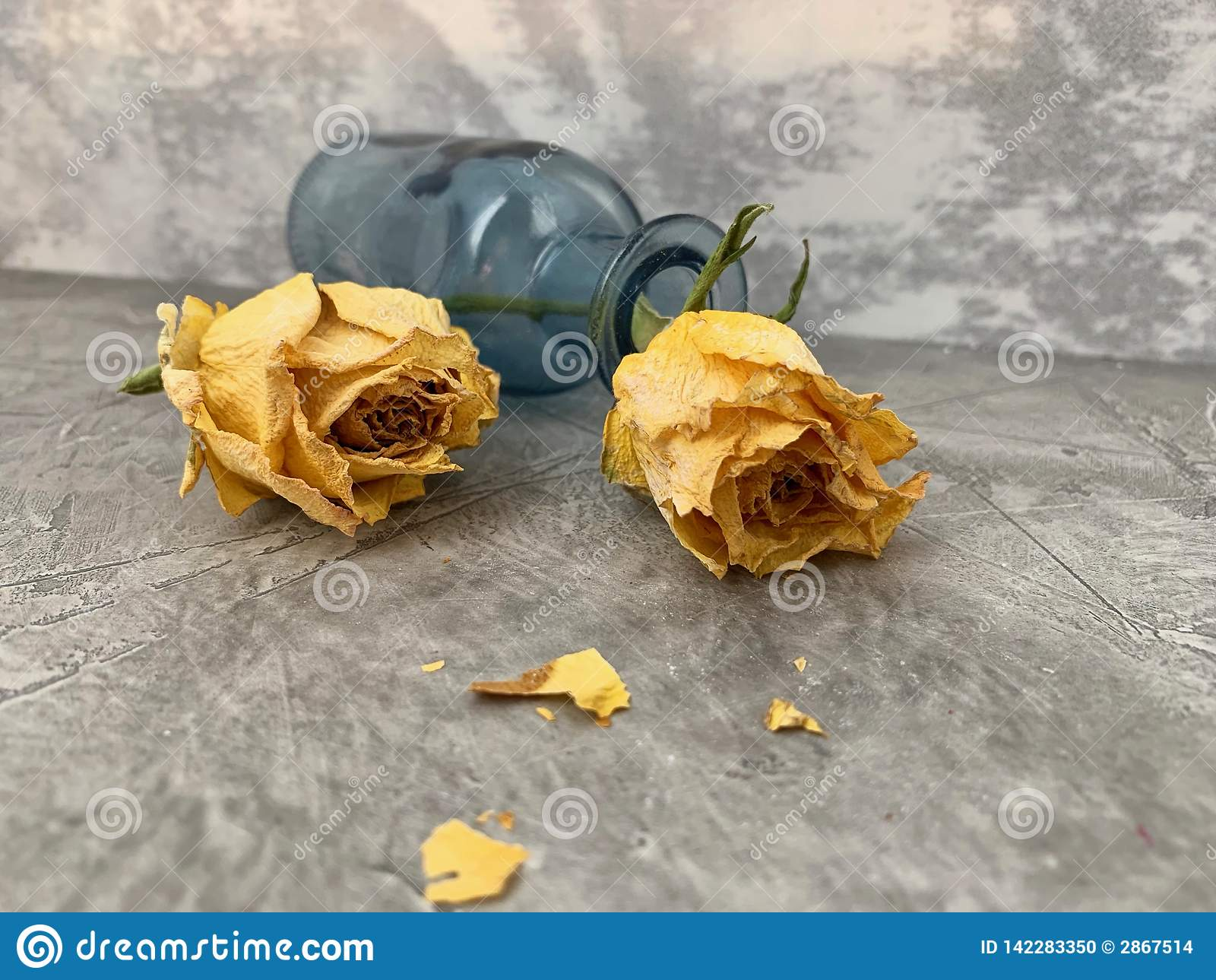 Rosas secas, amarillas