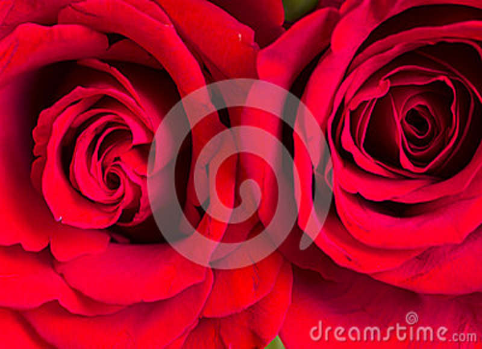 Download Rosas vermelhas foto de stock. Imagem de híbrido, bouquet - 29234982