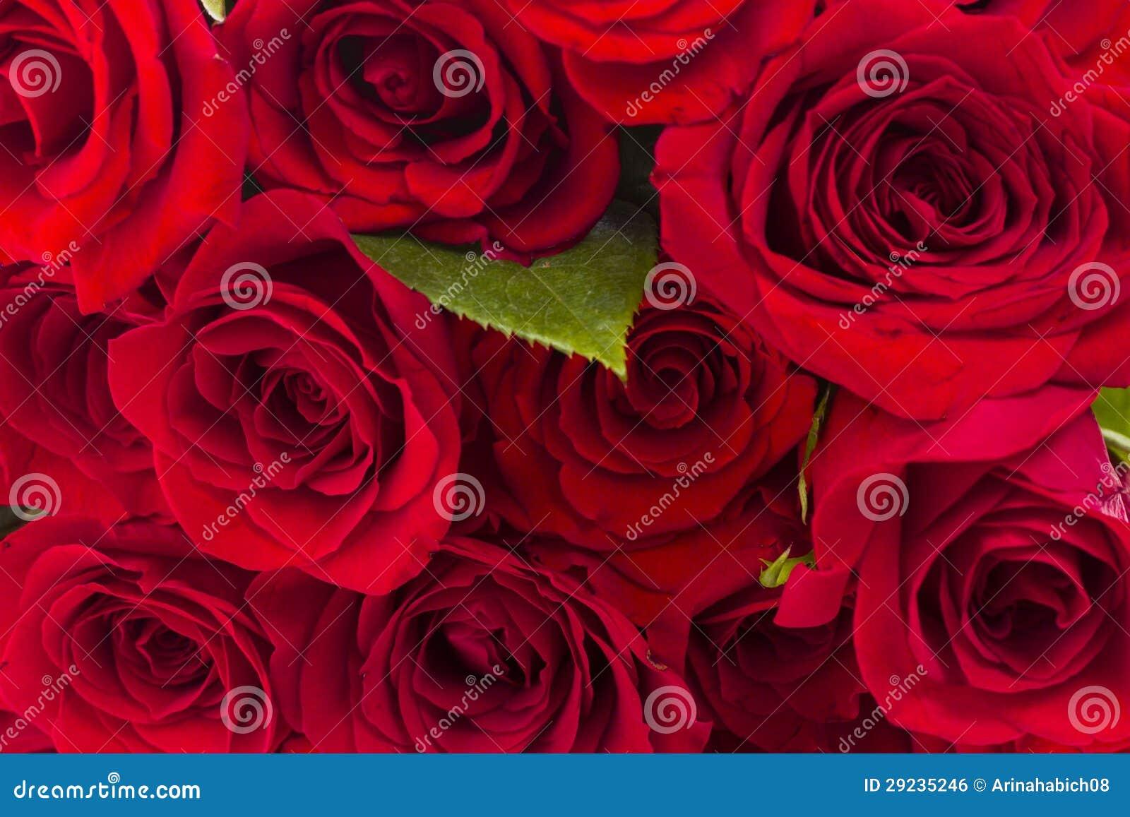Download Rosas vermelhas foto de stock. Imagem de perennial, genus - 29235246