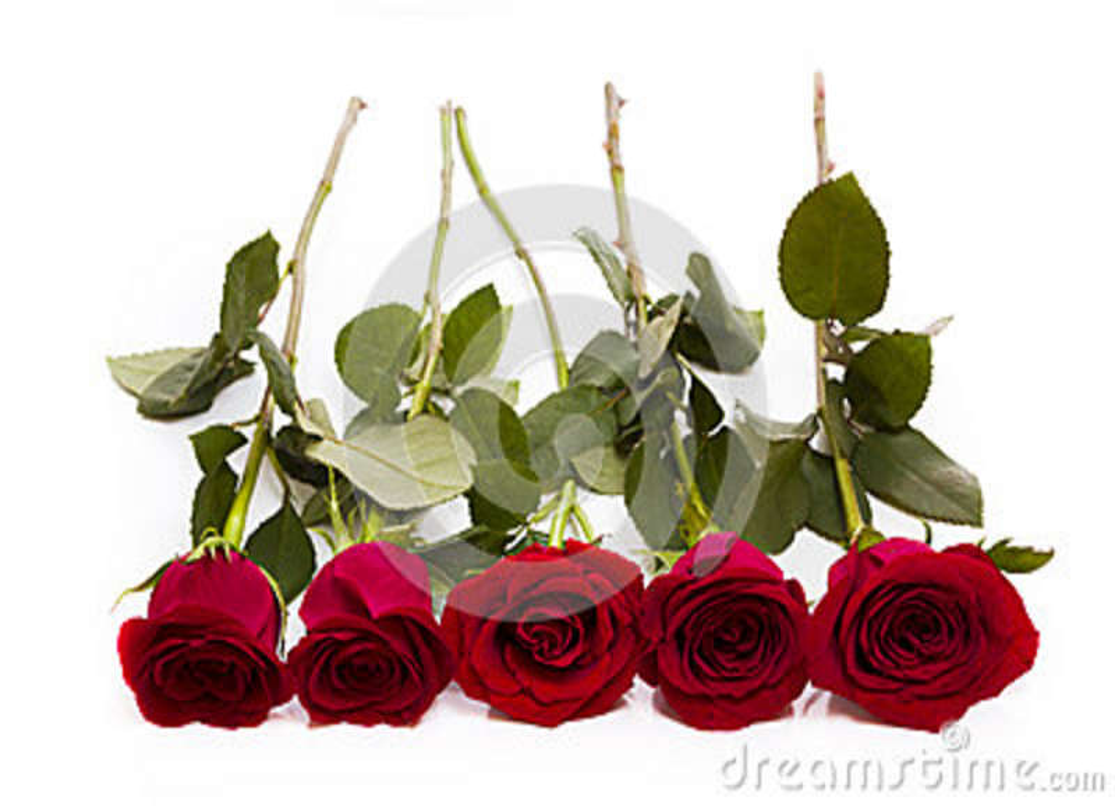 Download Rosas vermelhas foto de stock. Imagem de floral, levantou - 29243666