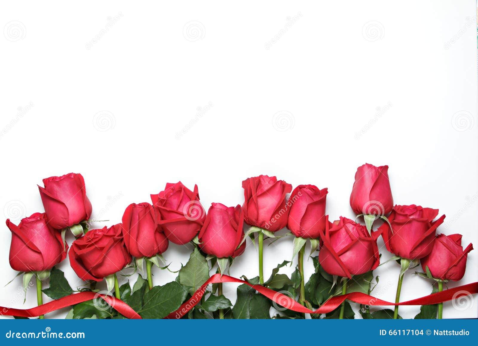 Rosas vermelhas com a fita no fundo branco O dia de Valentim, o aniversário e o fundo das felicitações
