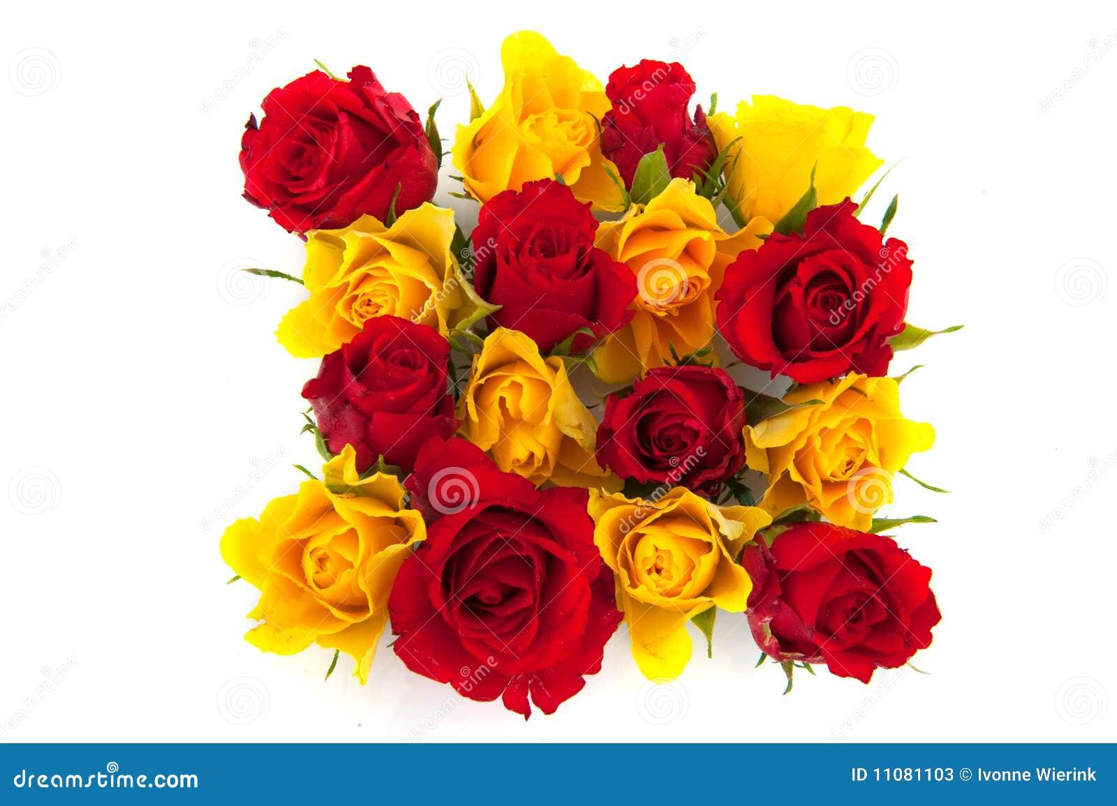 Rosas Vermelhas E Amarelas Imagem De Stock Imagem De Amarelo 11081103