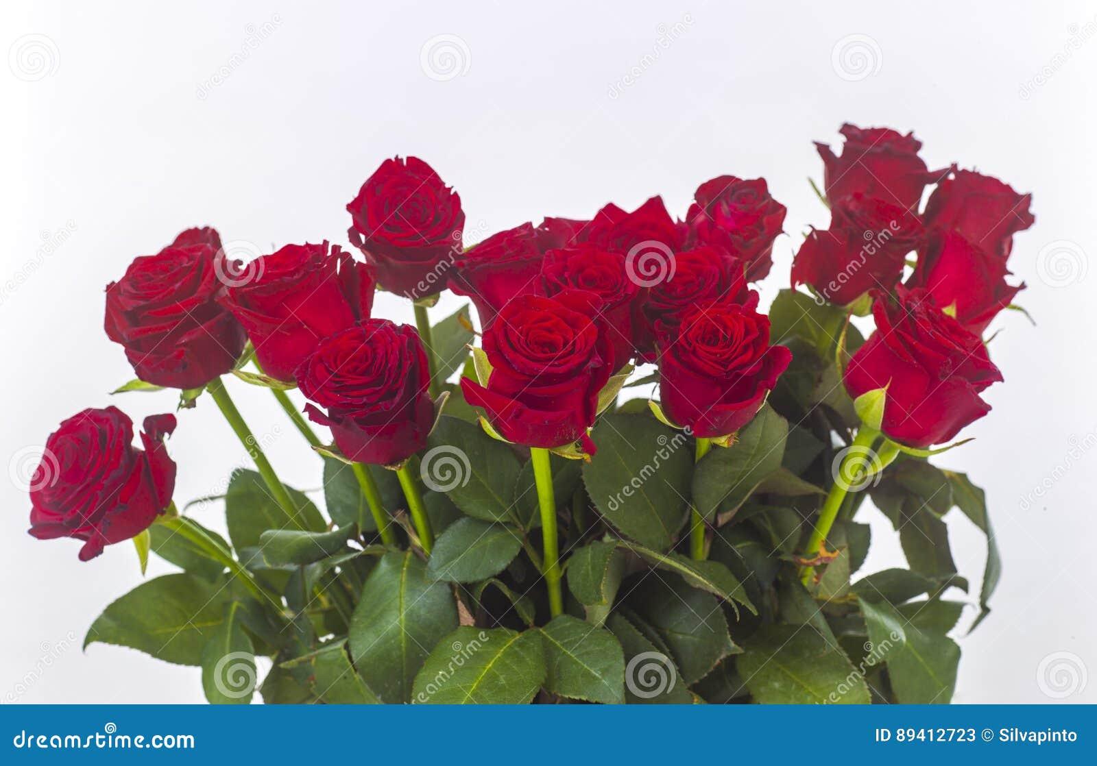 Rosas vermelhas isoladas