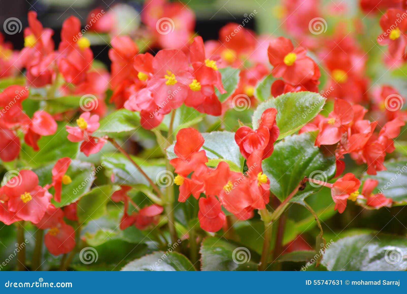 jardim rosas vermelhas: do resto do café da natureza da beleza do jardim o vestíbulo