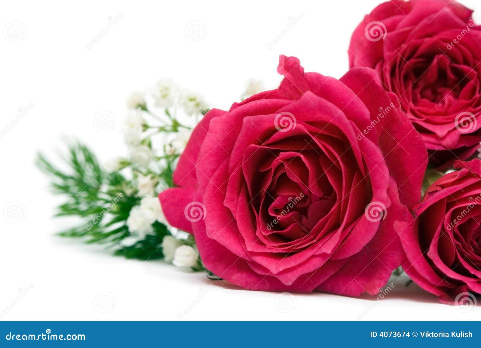 Rosas vermelhas sobre o fundo branco