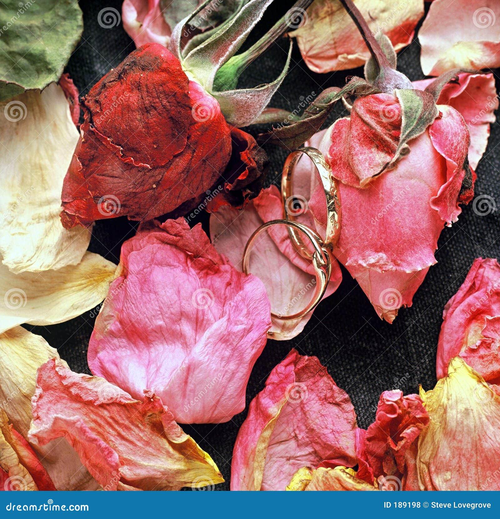 Rosas y anillos
