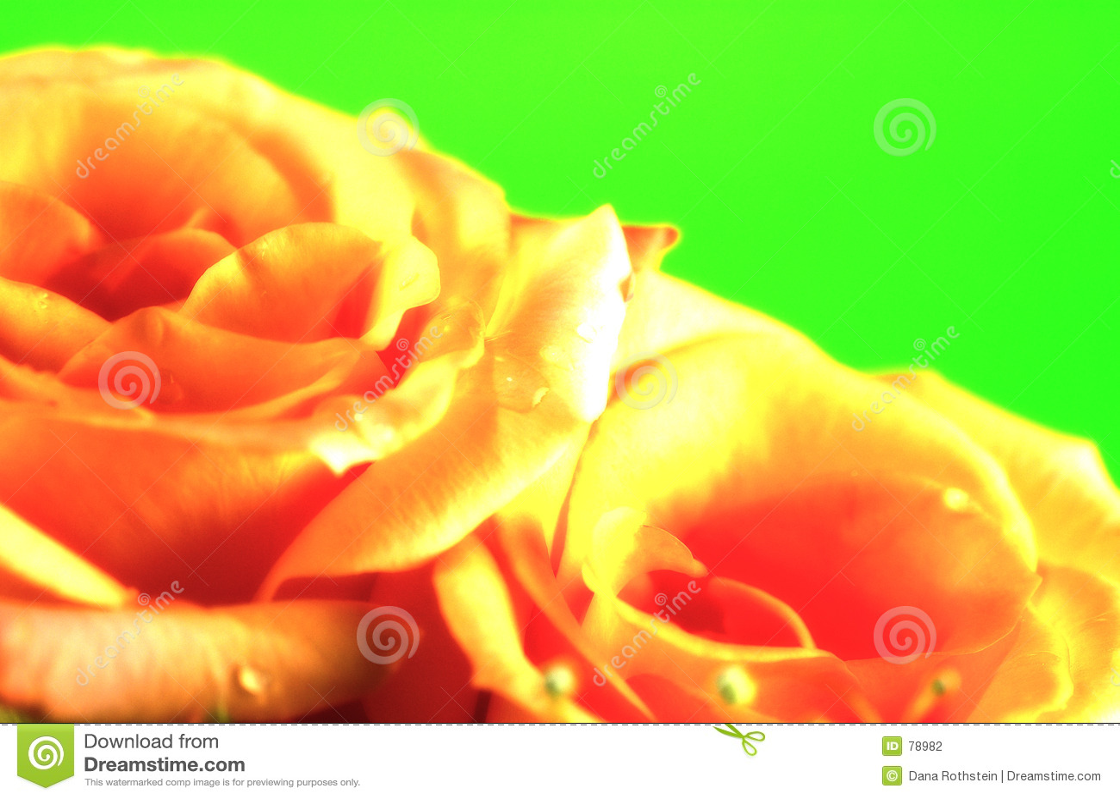 Rose,