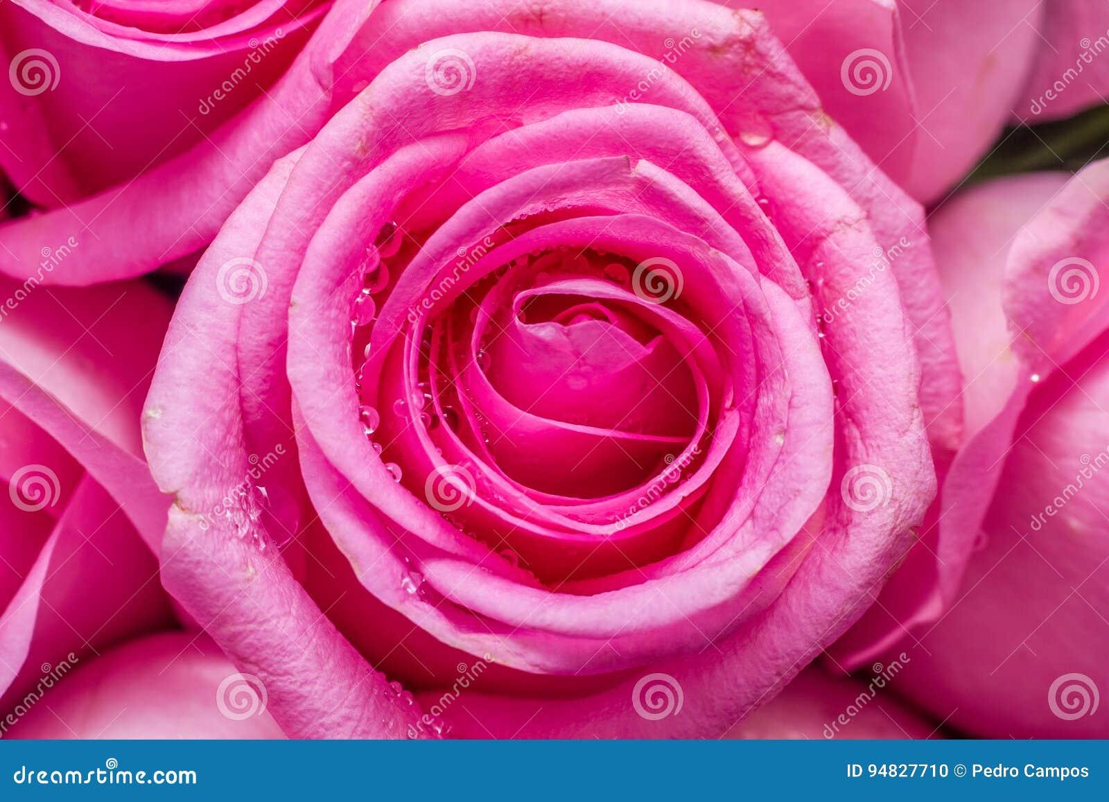 - rose,