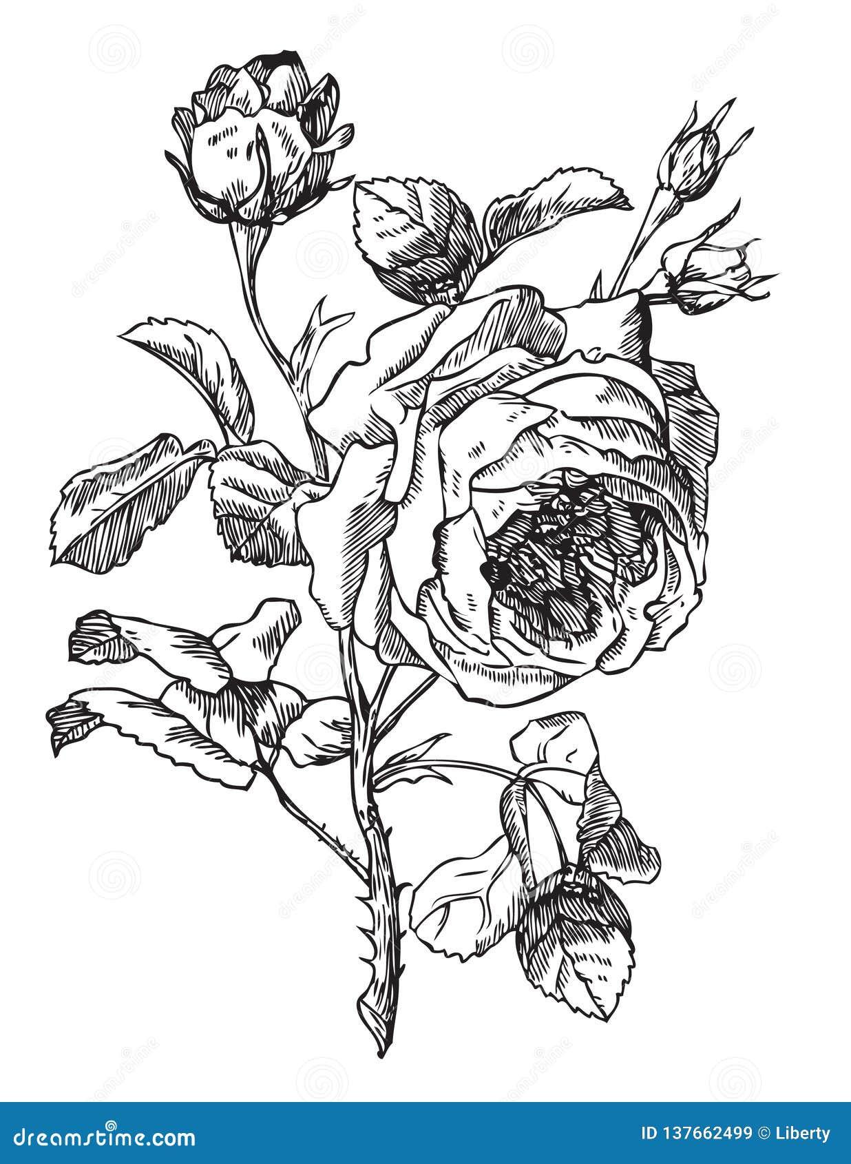Rose antyk