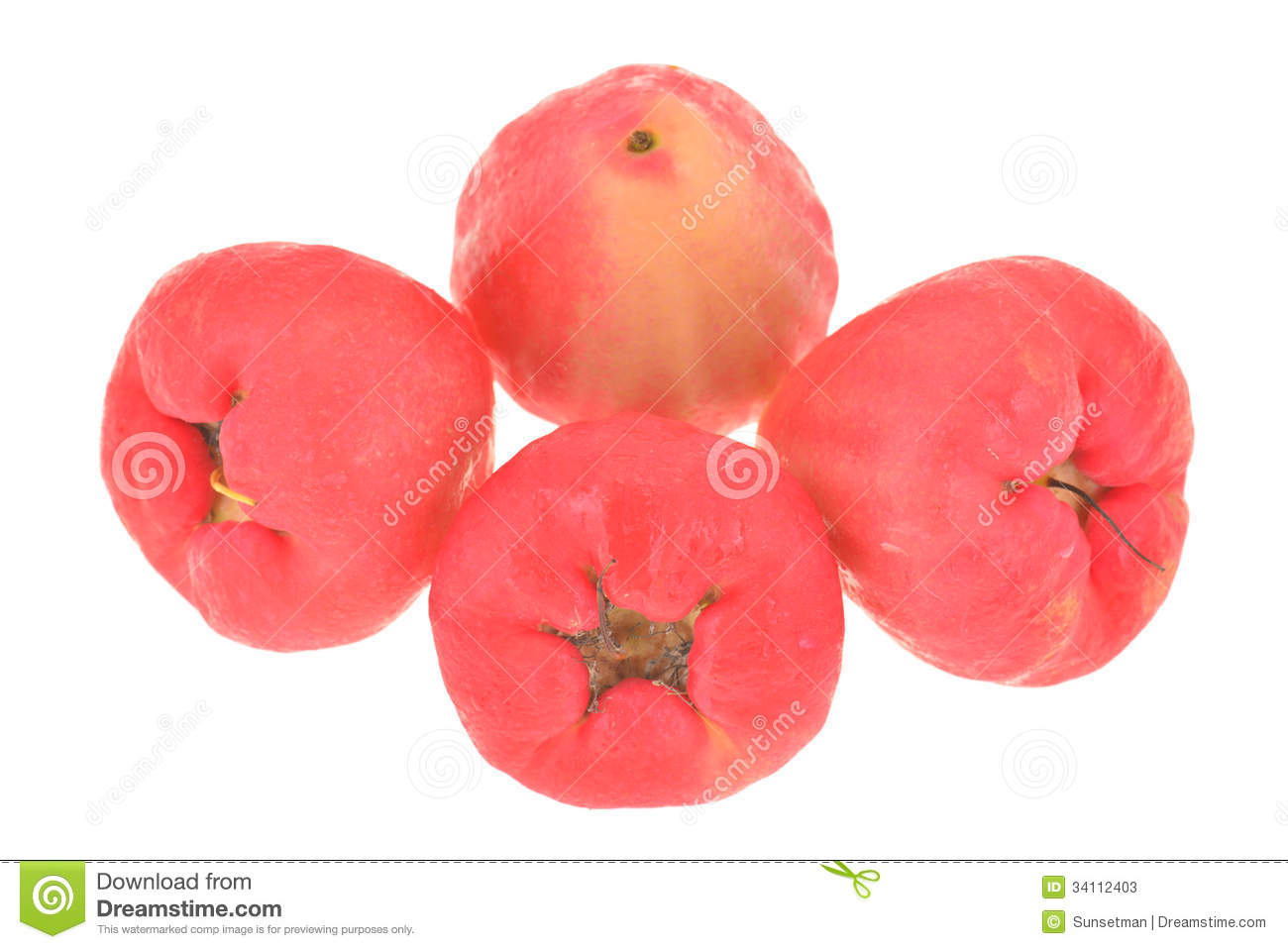 Rose Apple Fruit, Jambu