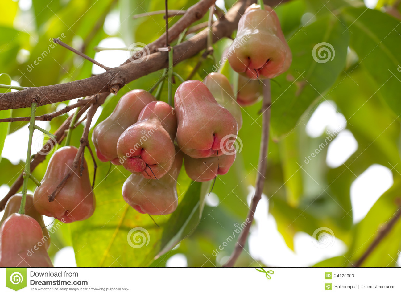 Unusual Apple Tree Garden Pictures Inspiration - Landscaping Ideas ...
