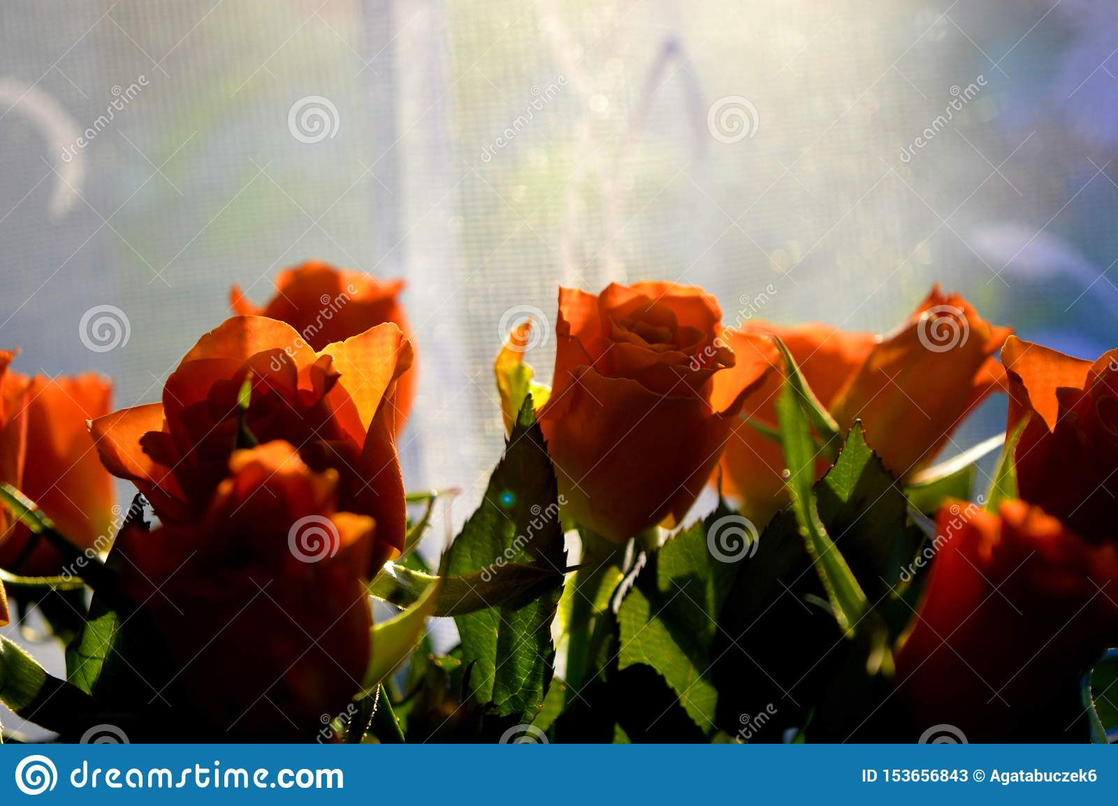 Rose arancio su un fondo blu e bianco