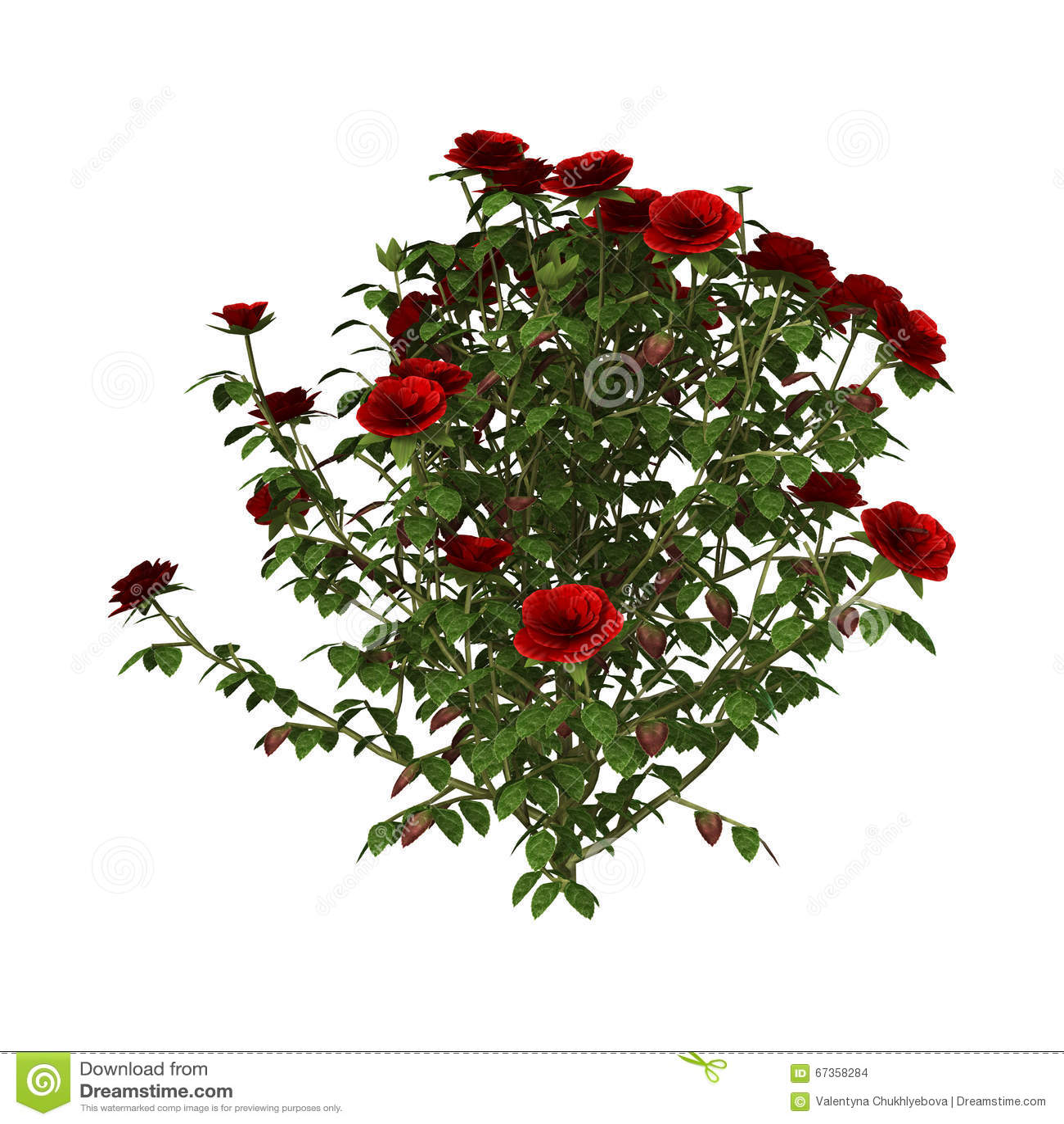 Rose arbusto roja