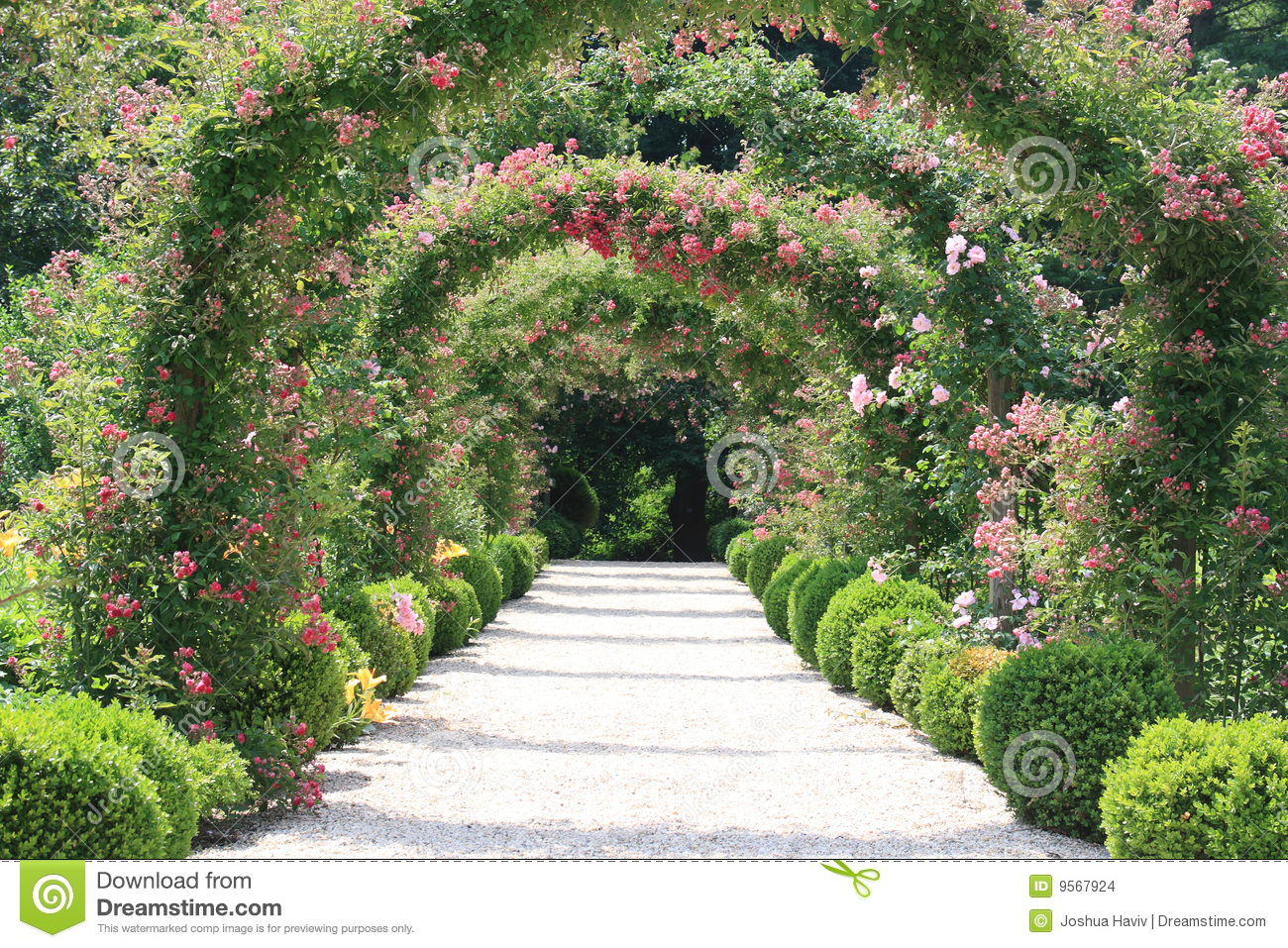 Rose Arch In The Garden Stock Images