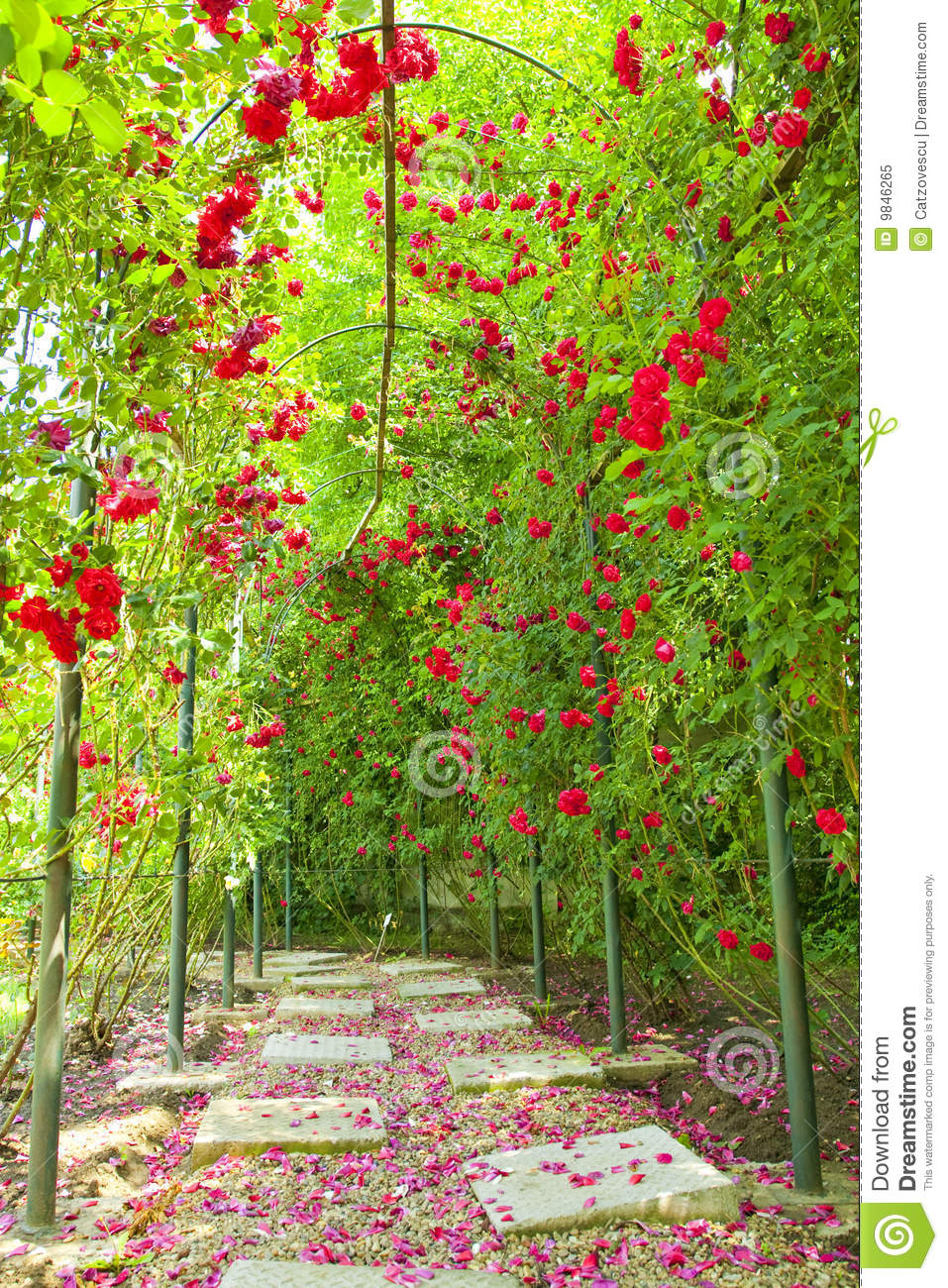 Rose Arch In A Garden Royalty Free Stock Photo Image 9846265