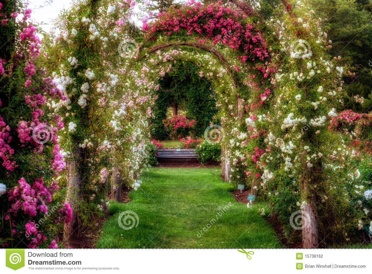 Rose Arches Stock Photo Image Of Park Flowers Bloom