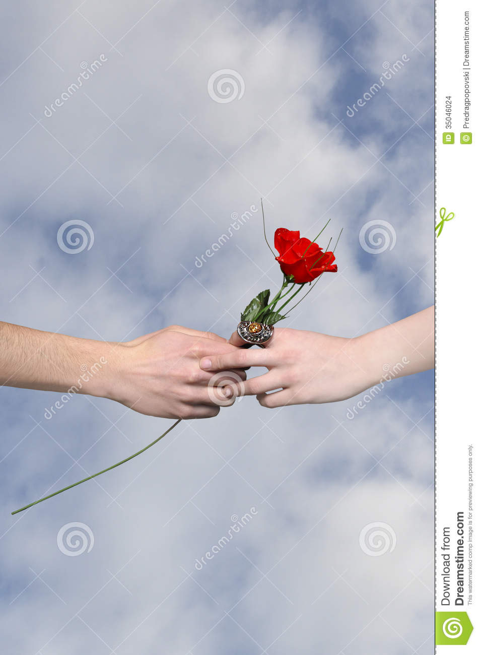 Rose As A Gift Sign For Peace And Love Stock Photo Image Of Miss