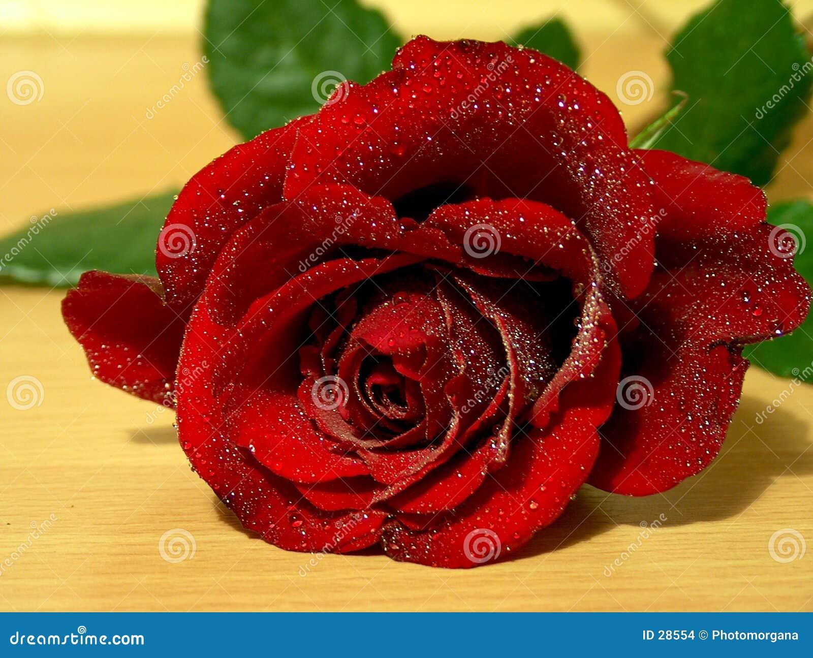 Rose avec le waterdrop