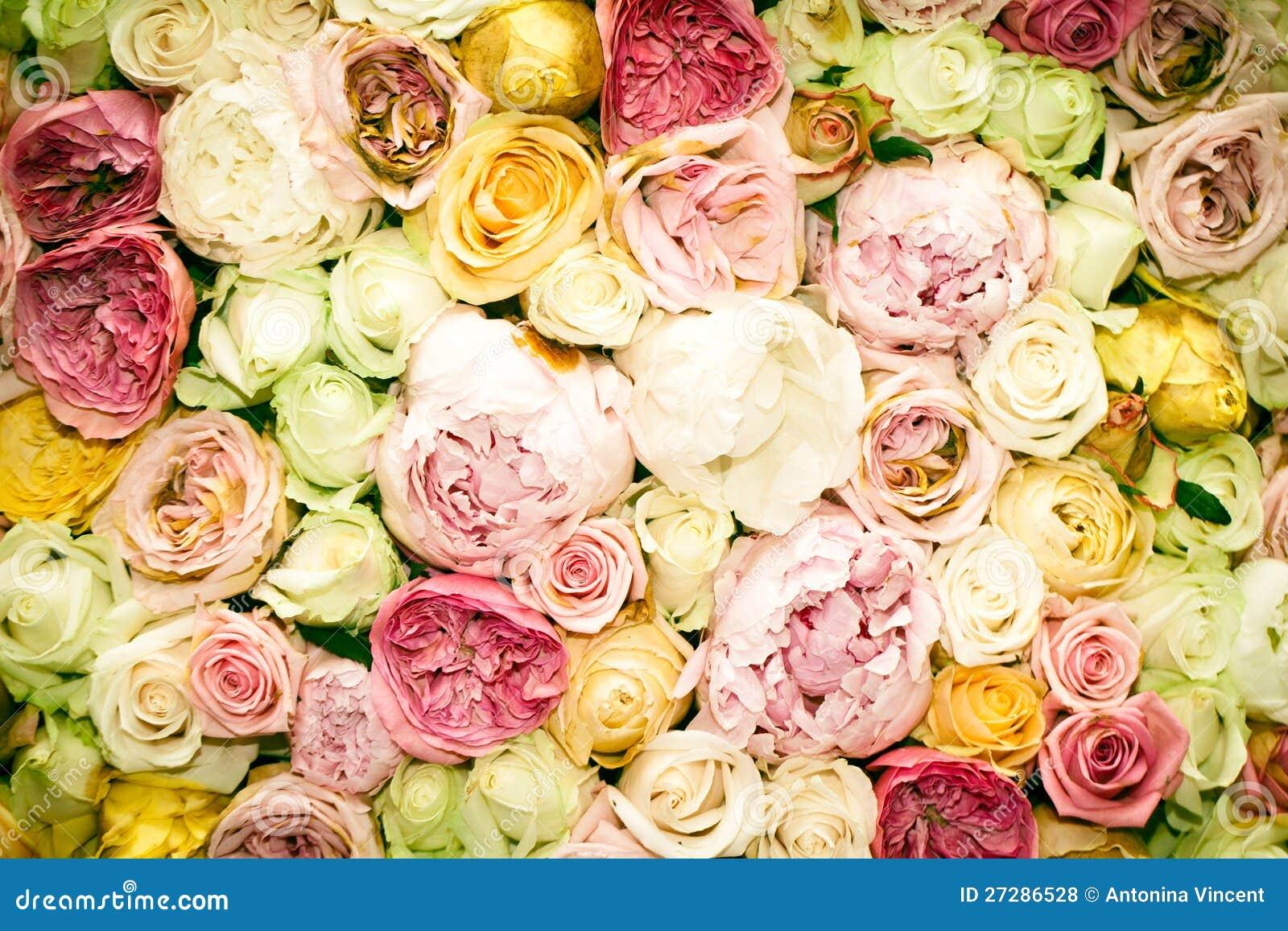 Rose bakgrund