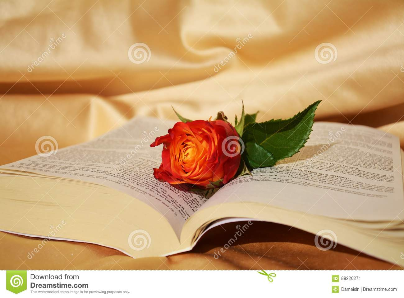 Rose and the Bible