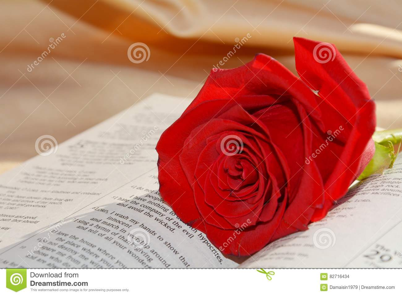 Rose And Bible Stock Photo Image Of Holy Lover Concept 82716434