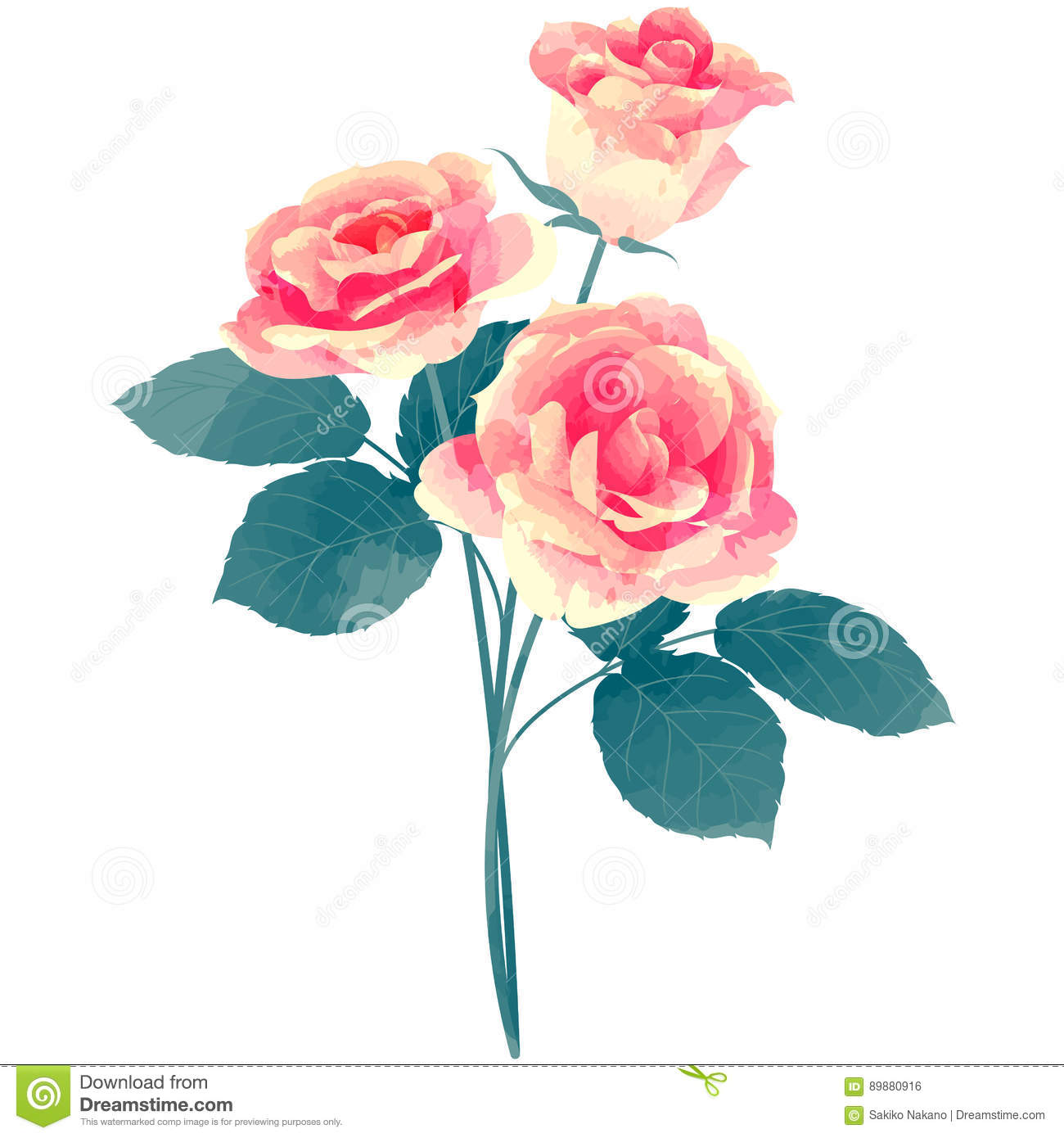 Rose - birth flower vector illustration in watercolor paint text