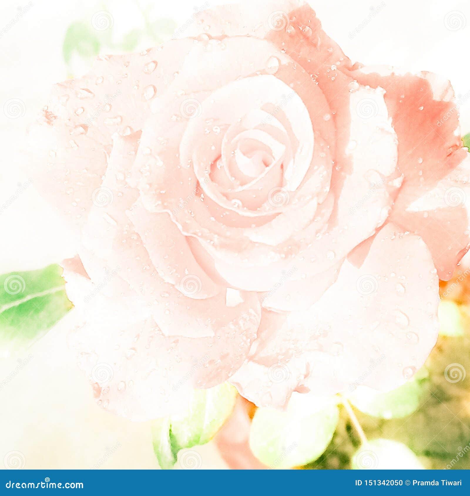 Fil De Peche Rose rose blanche brouillée par pêche avec des gouttelettes d'eau