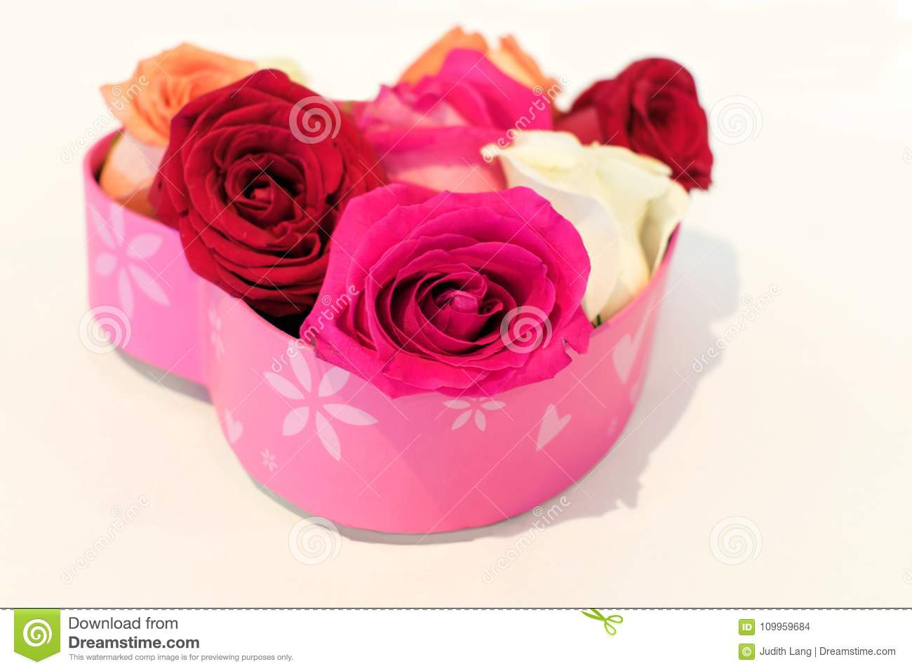 Rose blossoms in heart shaped pink box on white