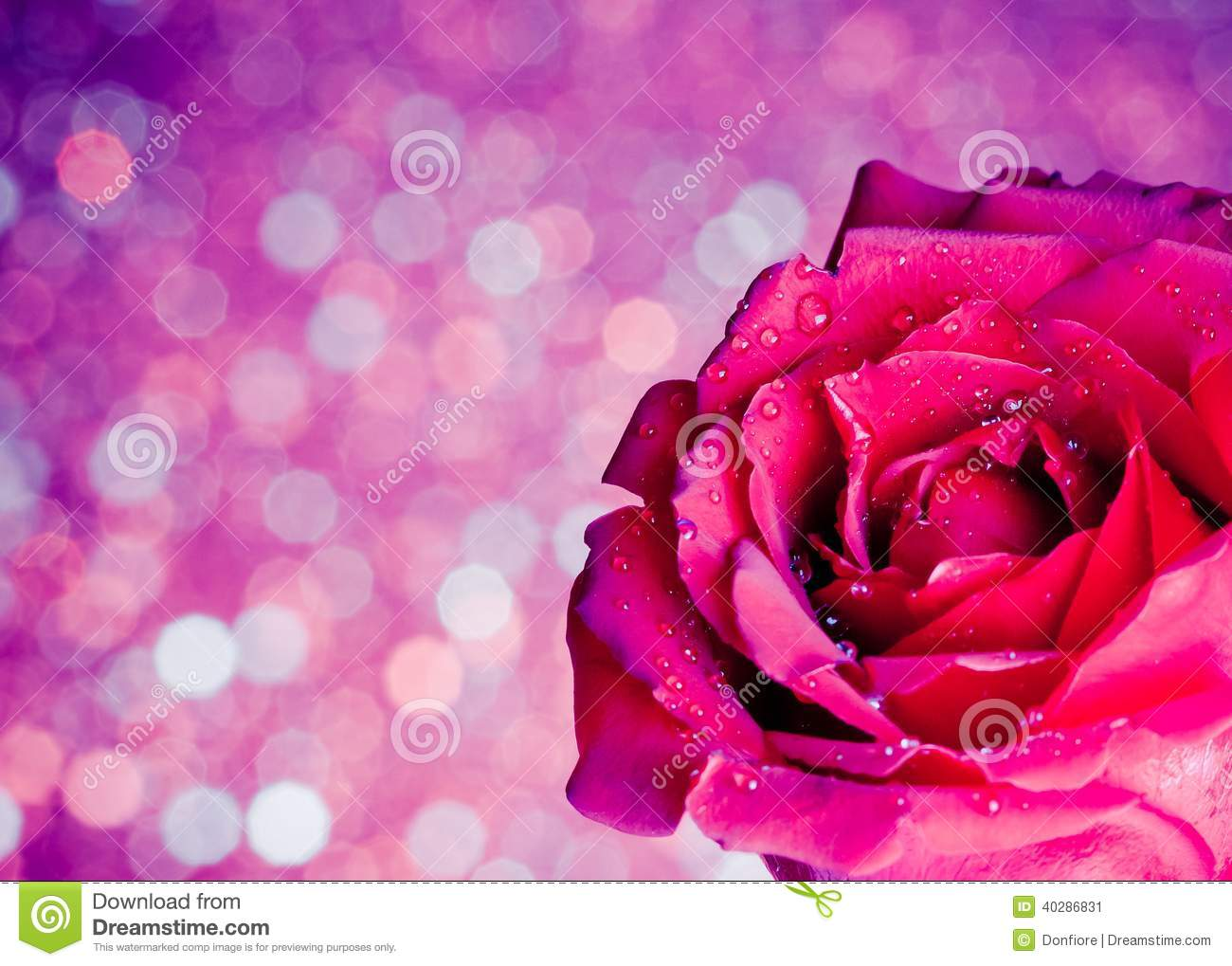 Rose On Blue And Violet Bokeh Background, Valentine Day And Love Concept