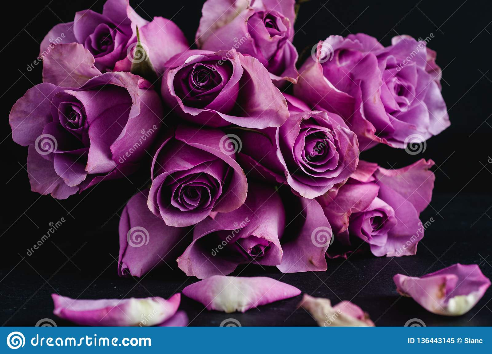Rose Bouquet On A Black Background Stock Image Image Of Roses Pink 136443145