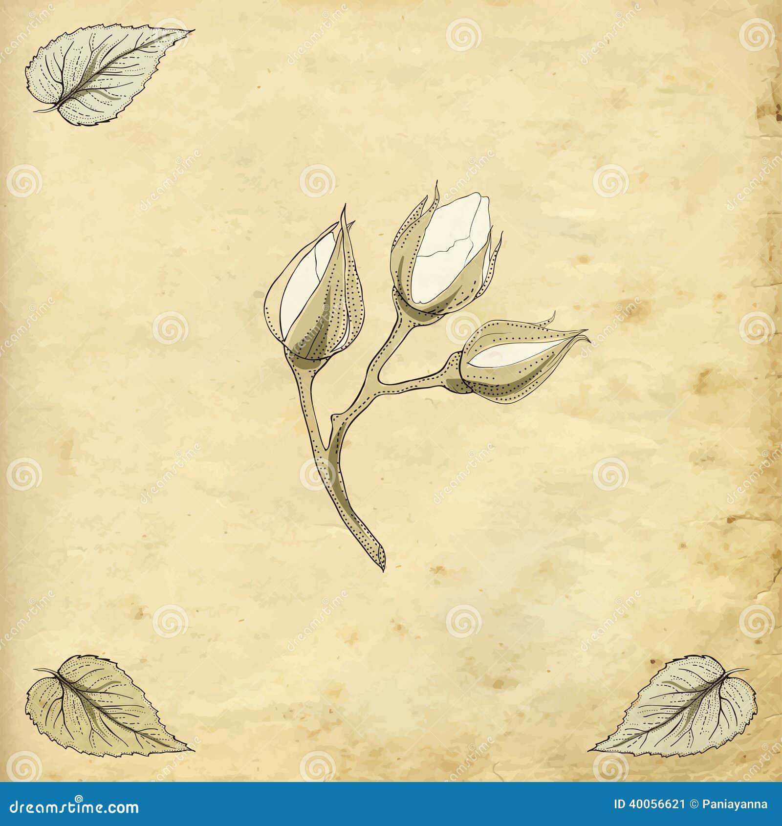 Rose bourgeonne le dessin illustration de vecteur image - Dessin bourgeon ...