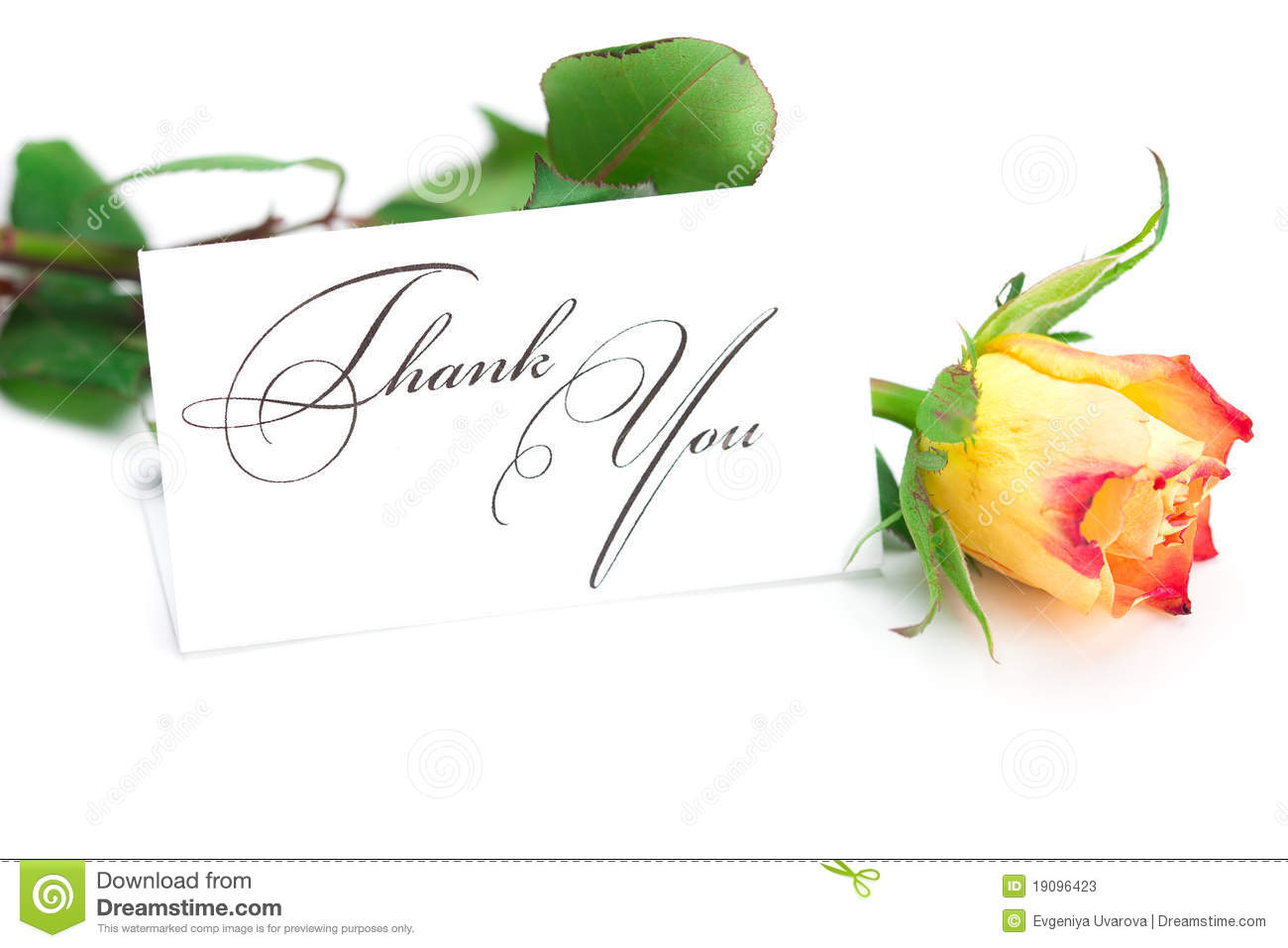 Rose And A Card With The Words Thank You Stock Image Image Of