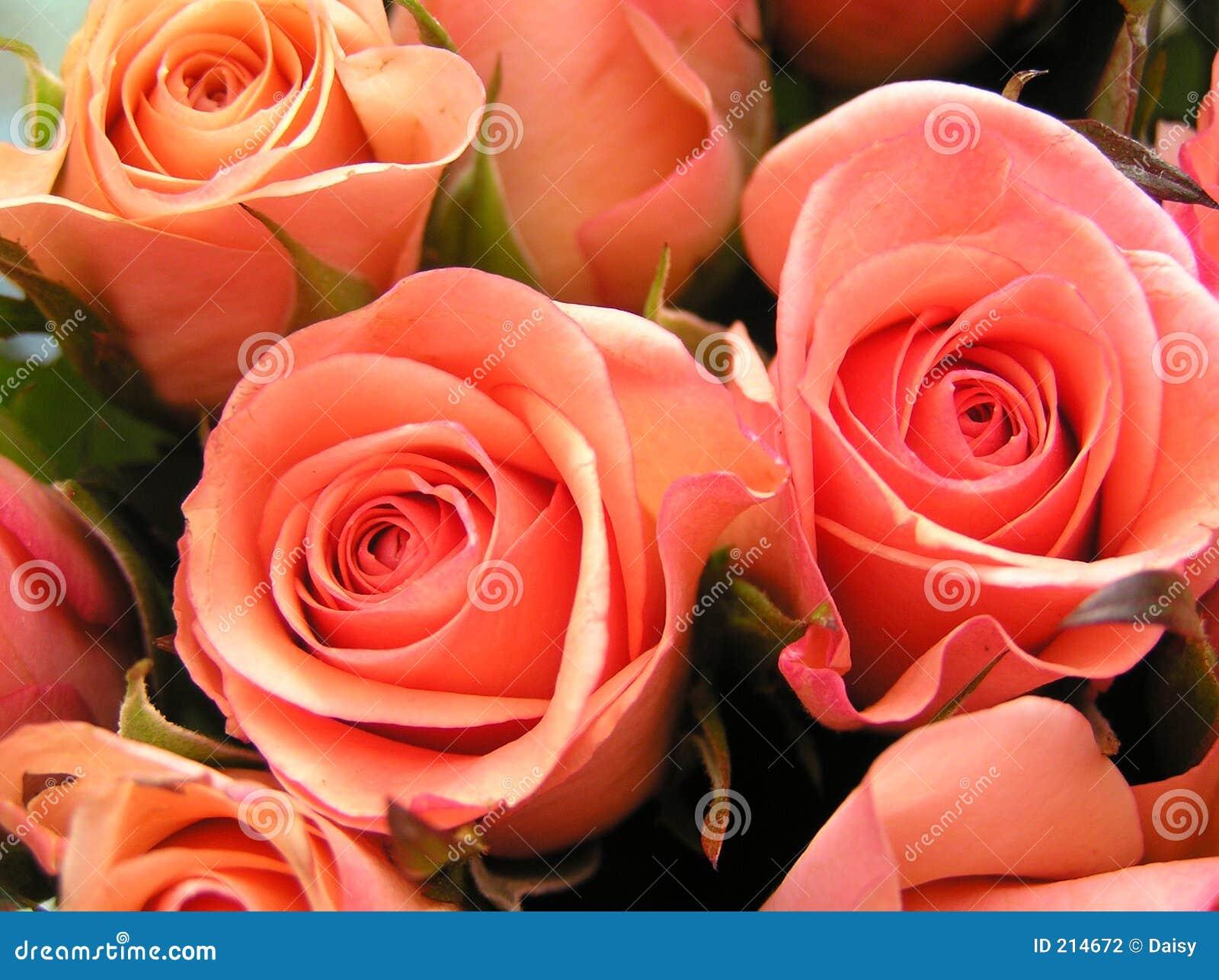 Rose colorate corallo