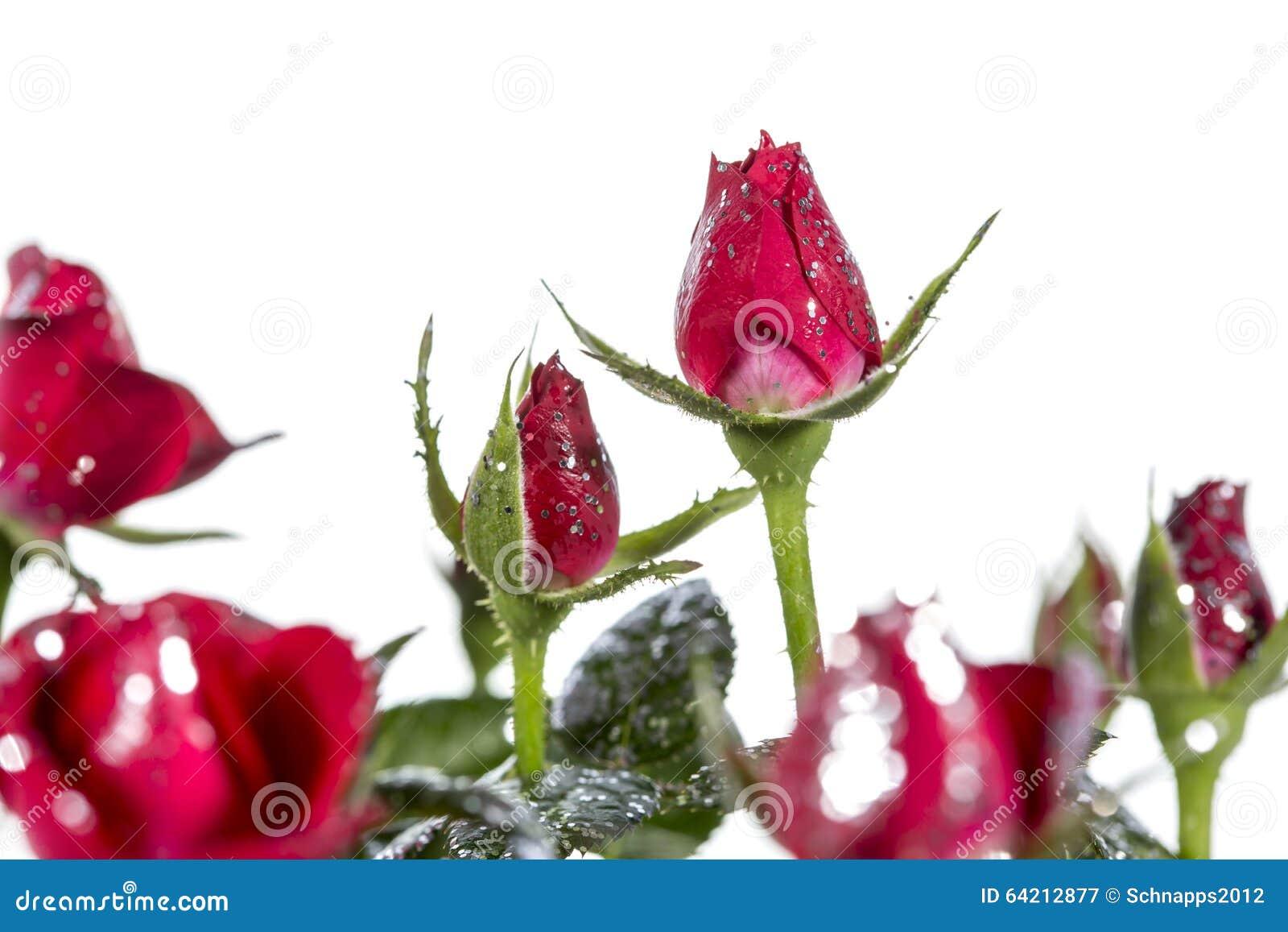Rose con brillo