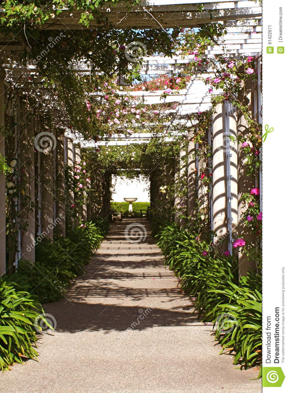 Huntington Library And Gardens Rose Covered Arbor Stock Image ...